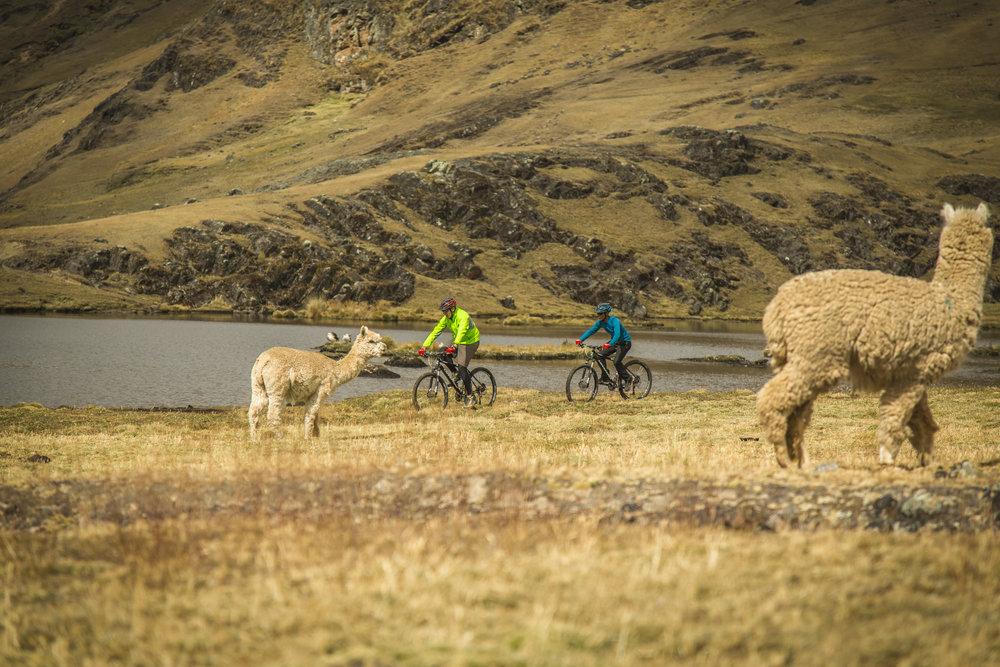 Biking in Peru.jpg