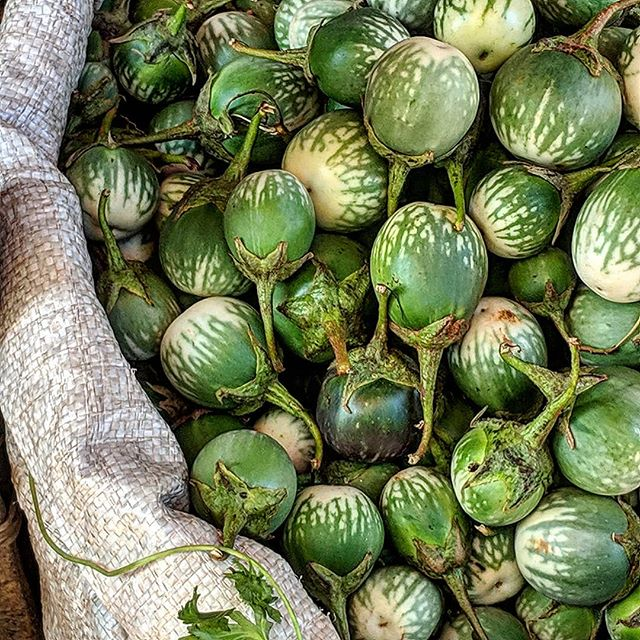 It's all about the ingredients and these small eggplants seem just perfect. . . . . #culinarytravel #markets #freshproduce #organic #srilanka #KilachandandKarp #gastrotravel #wanderlust