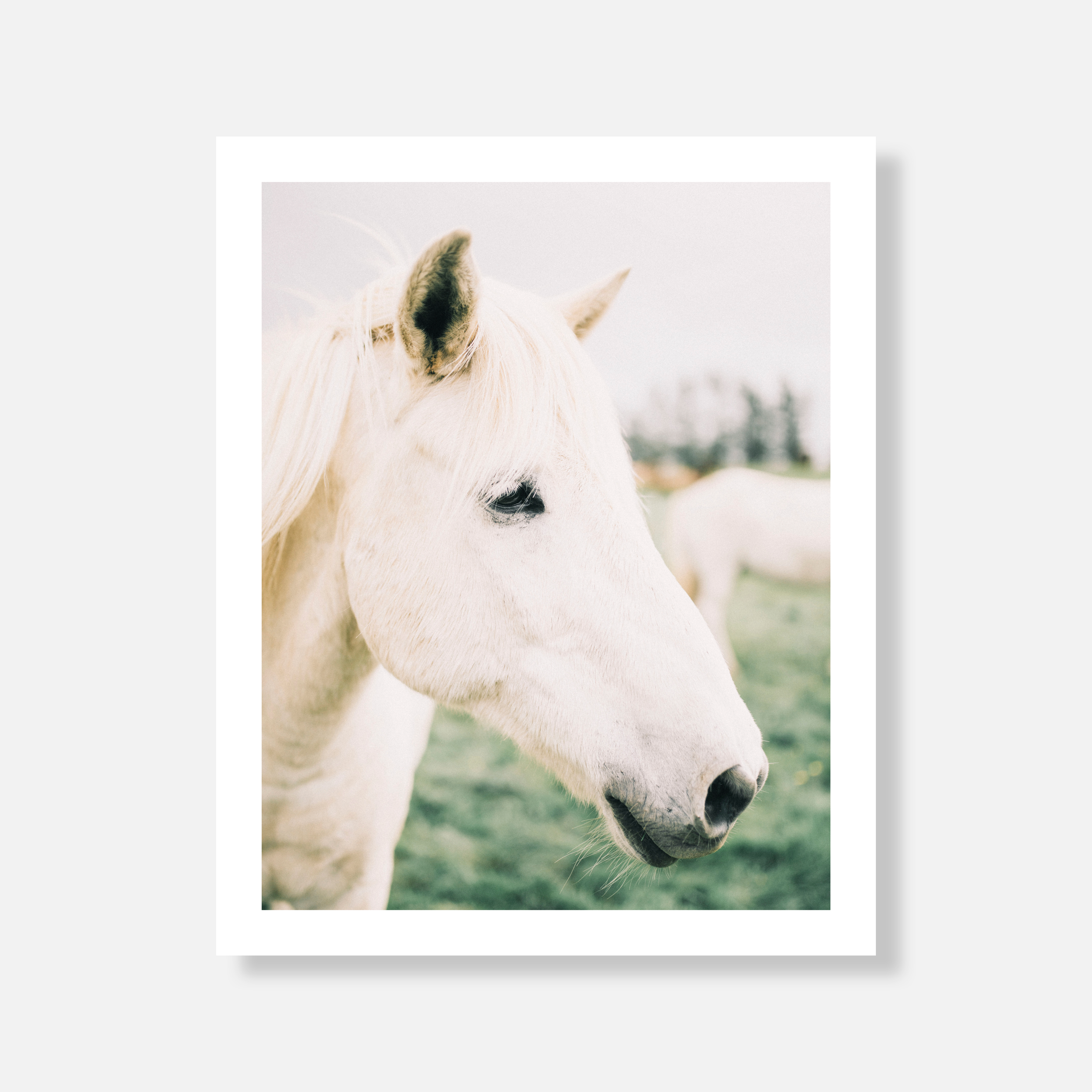 horse-shop-page-photo.png