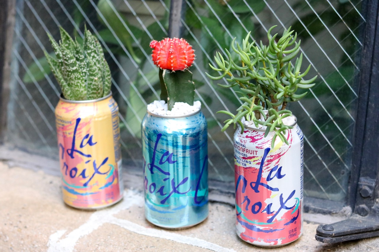 Upcycled La Croix Summer Succulents Planters #upcycle #lacroix #succulents #indoorgarden #houseplants #planter #earthday #cactus #airplants