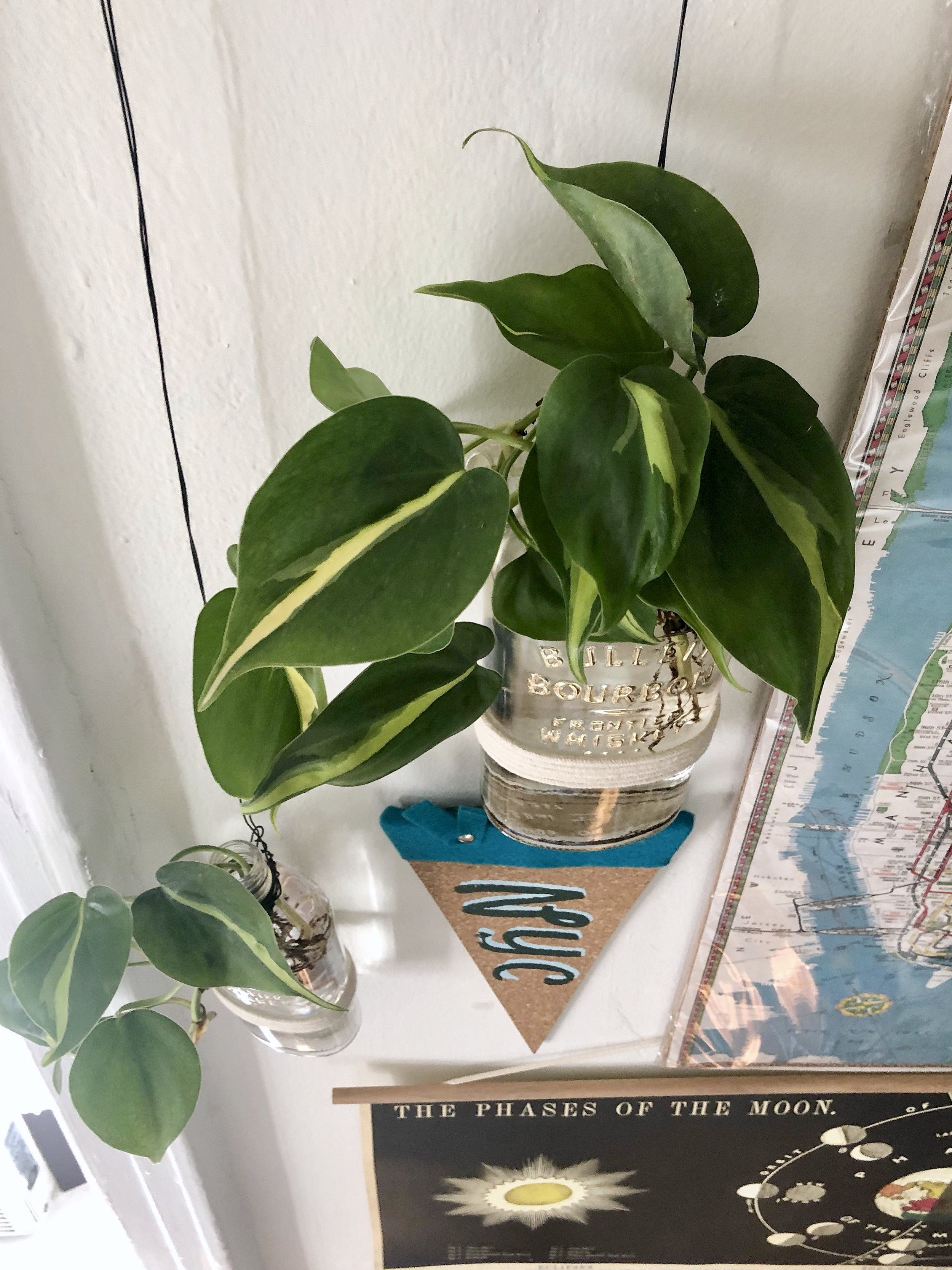 Gold Leafed Upcycled Bulleit Whiskey Bottle Planters #goldleaf #whisky #bourbon #upcycle #recycle #planter #houseplants #apartmentthearpy #apartmentliving #smallspaces #homedecor #indoorgarden #philodendron #earthday #earthdaycraft