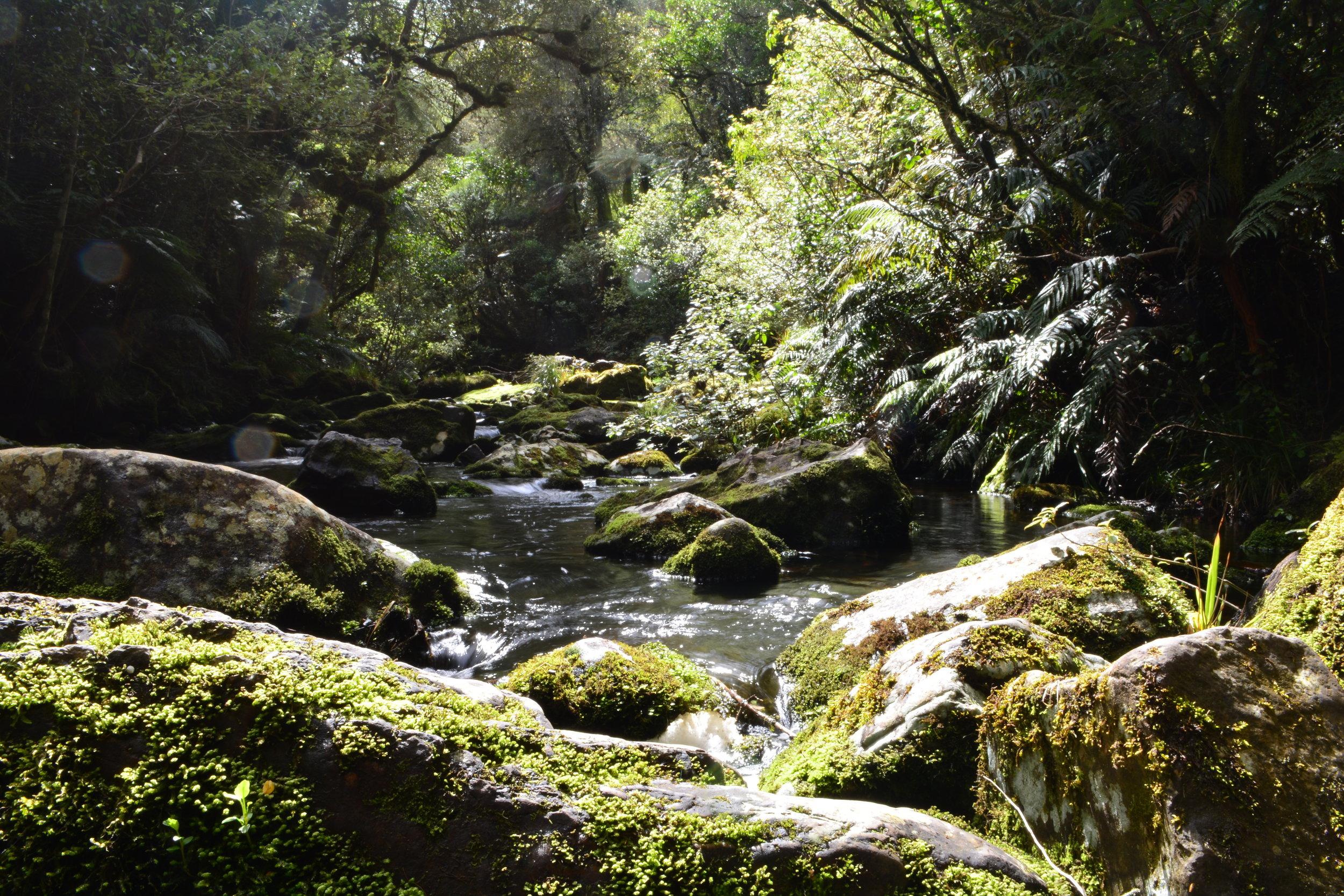 Parakanui Falls Catlins Coast