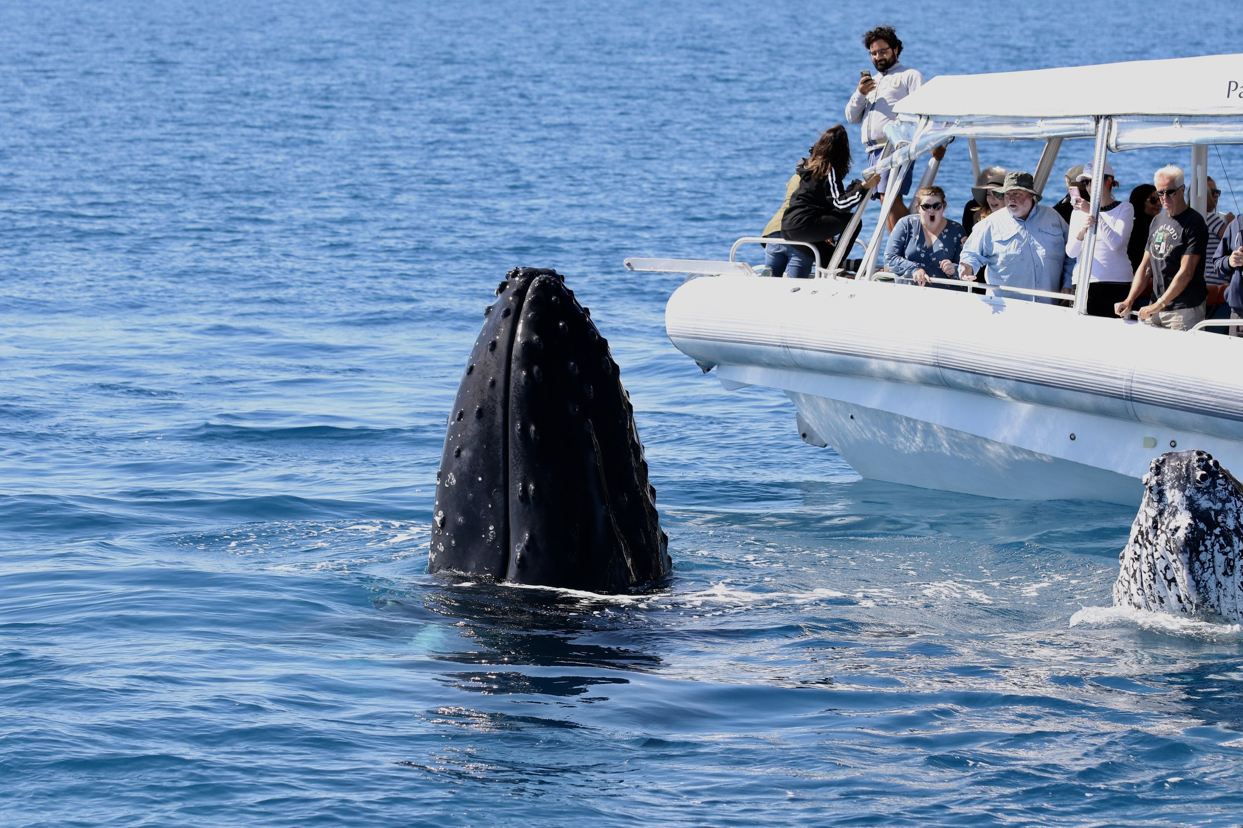 Sustainable Whale-watching