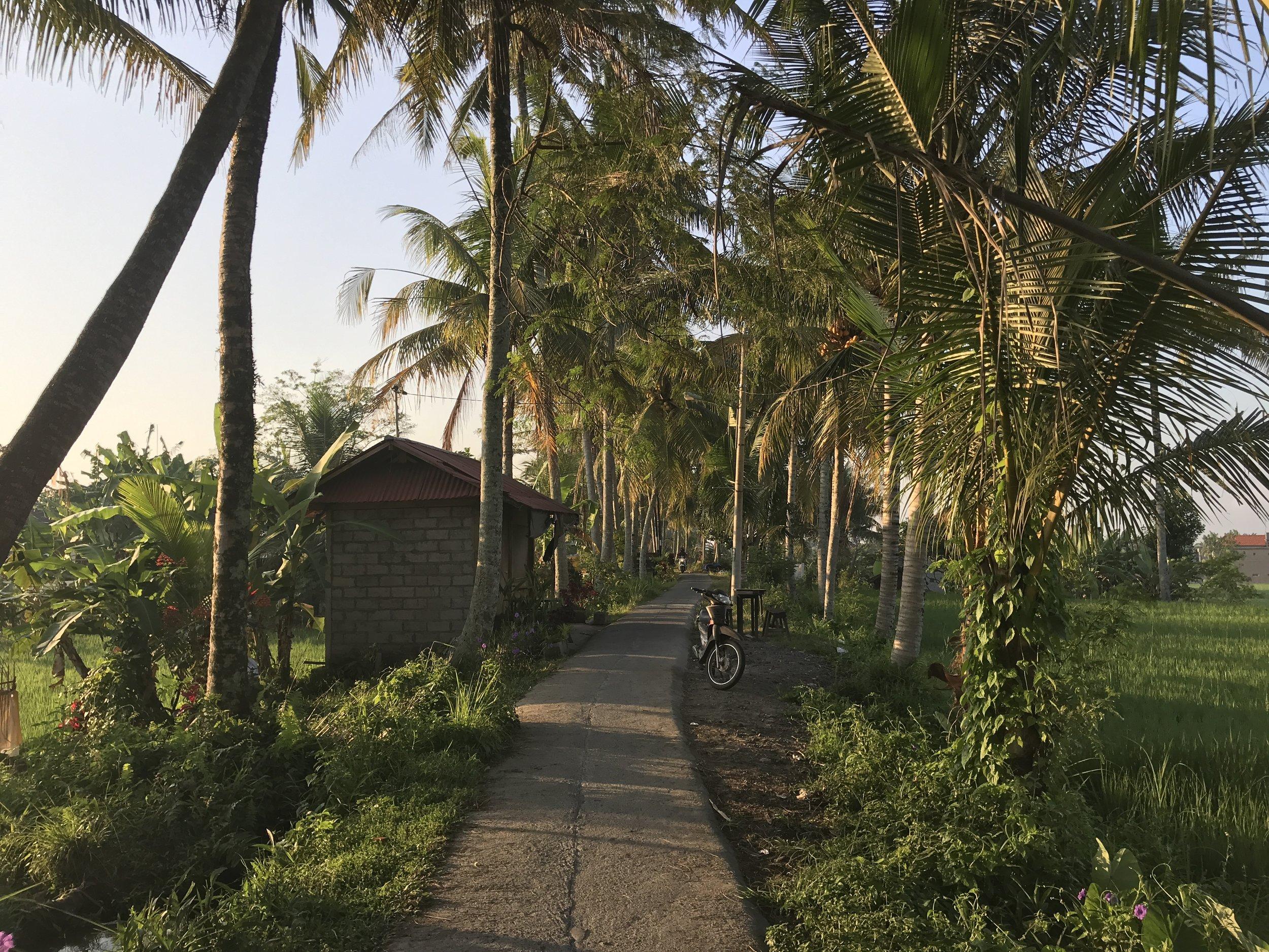 Morning Sun on Rice Fields, Ubud