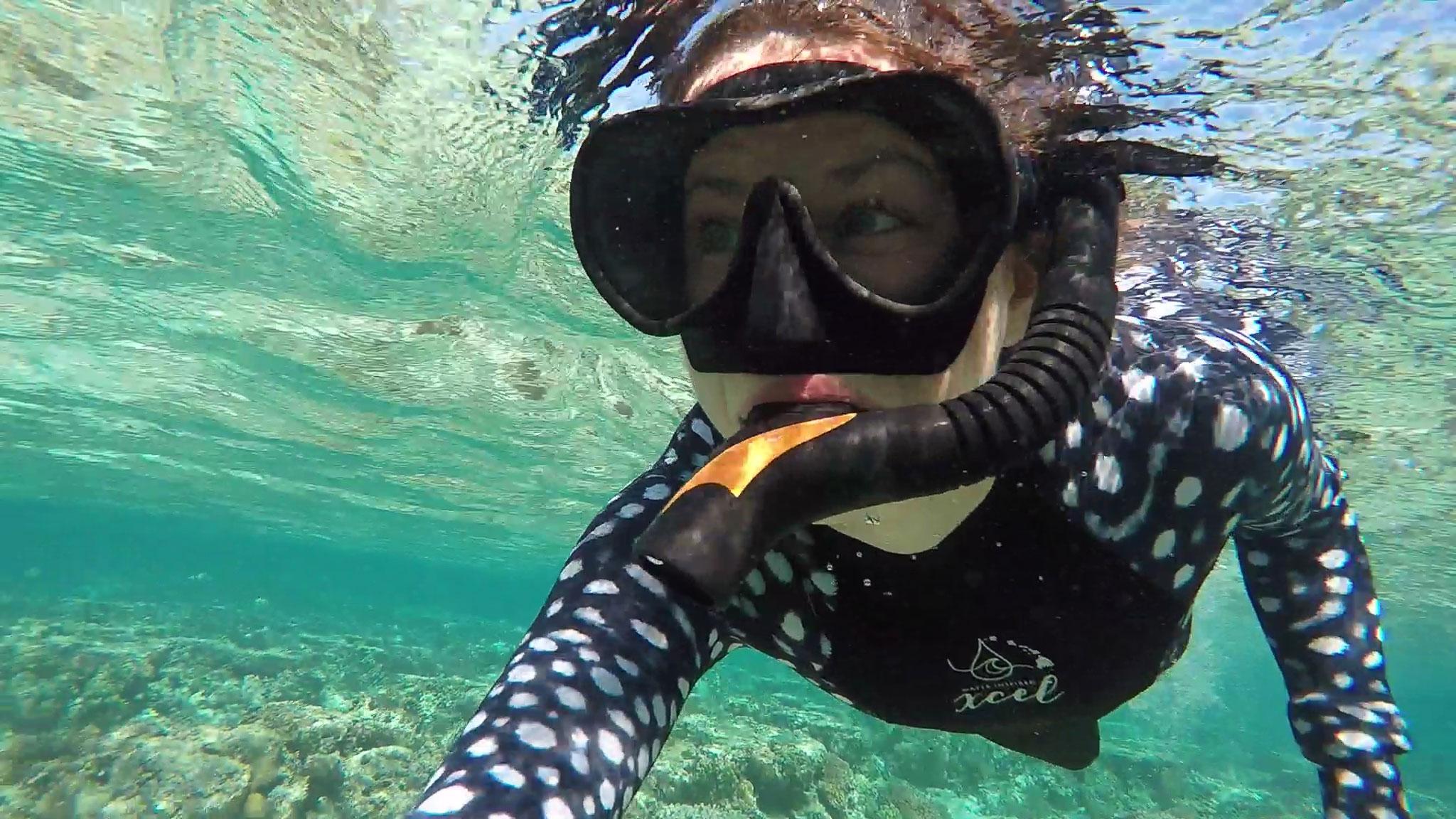 Lady Elliot Island Sea Turtles