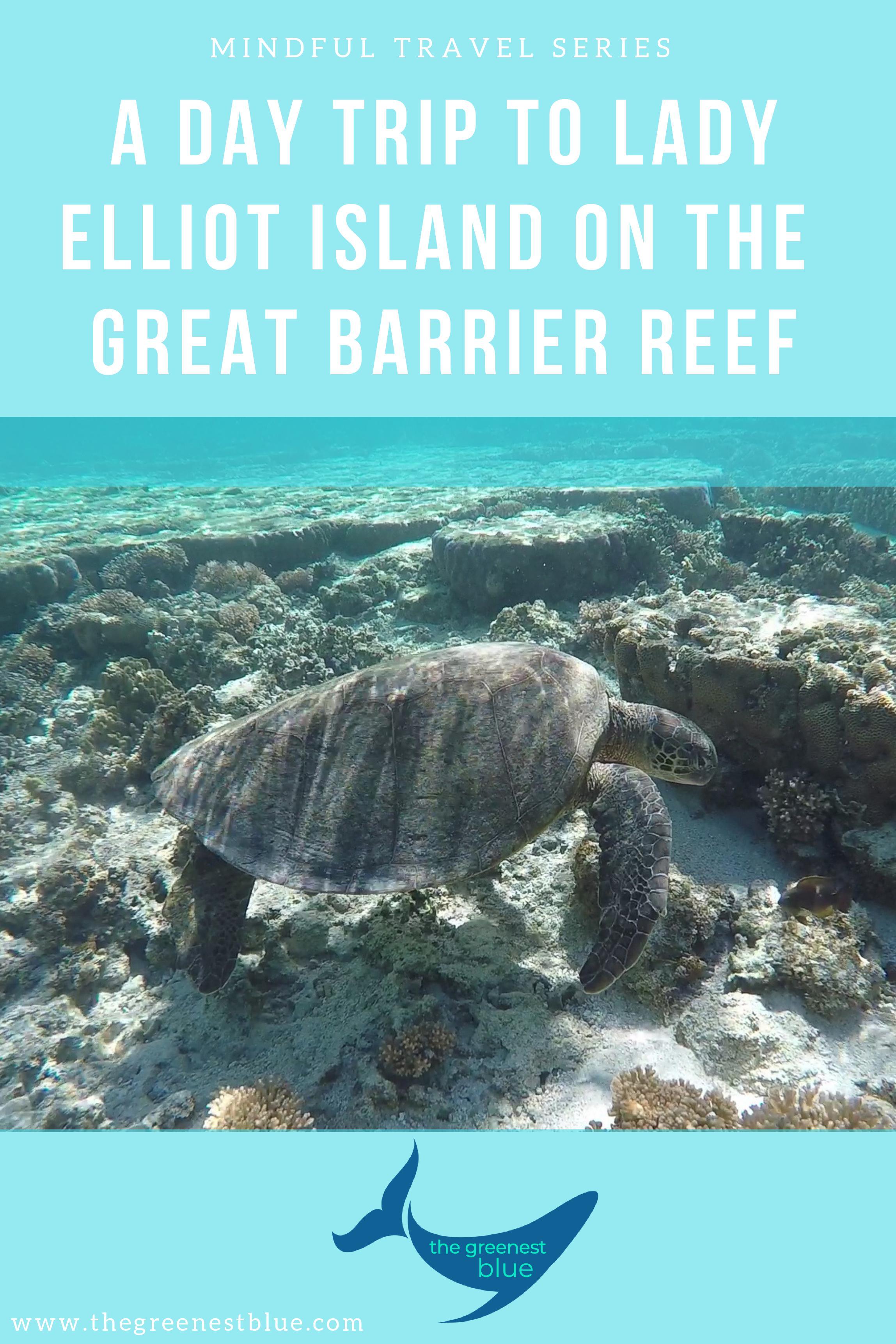 A Day Trip to Lady Elliot Island