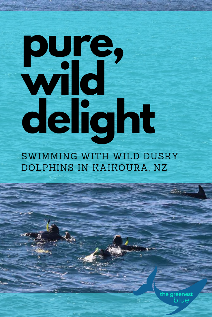 Five Fun Facts About Dusky Dolphins & Why I Think Swimming With Them is Ethically A-OK