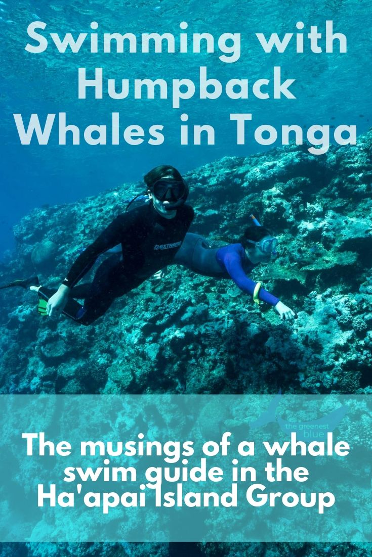 Confessions of a Whale Swim Guide in Tonga