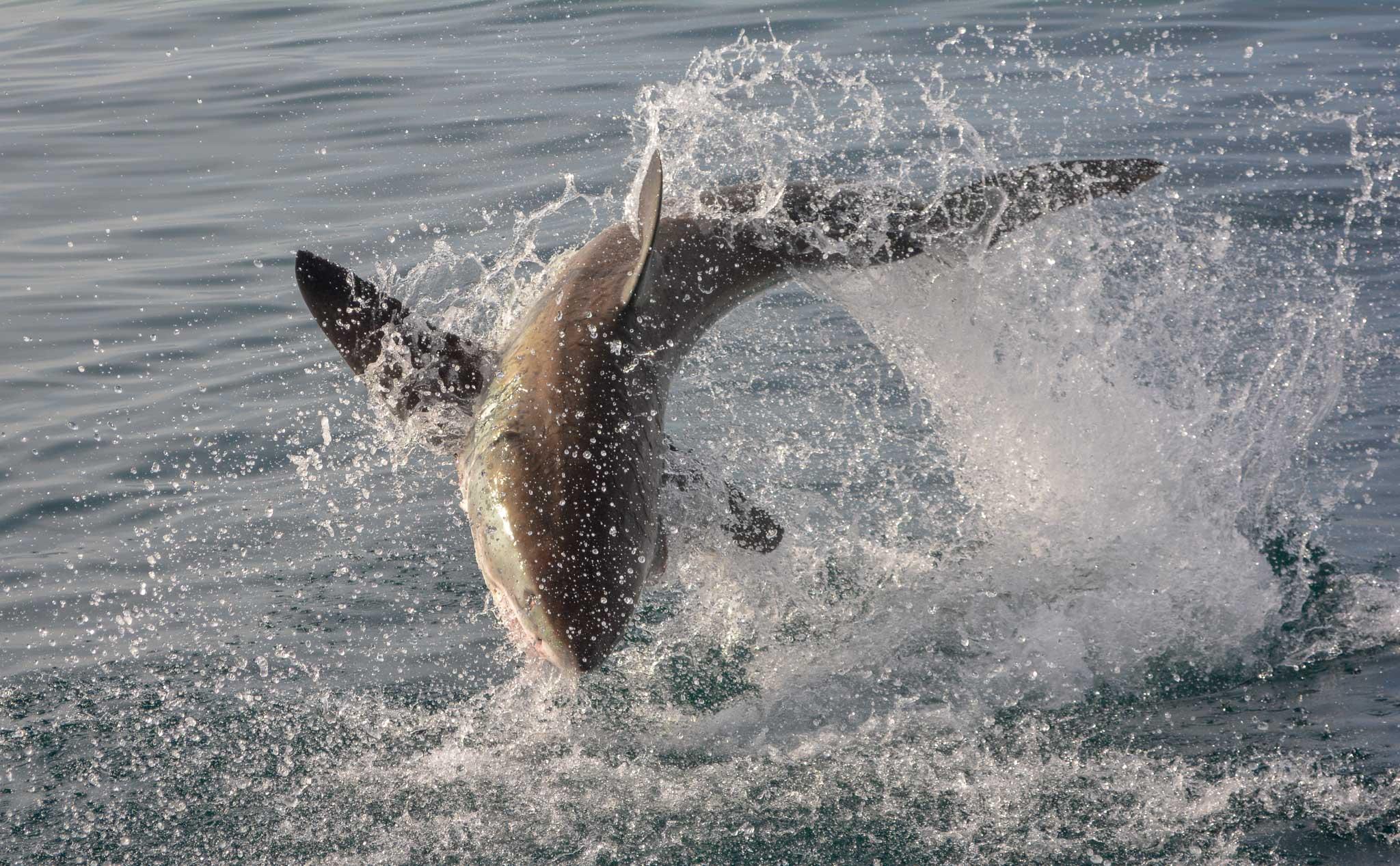Marine Wildlife Conservation