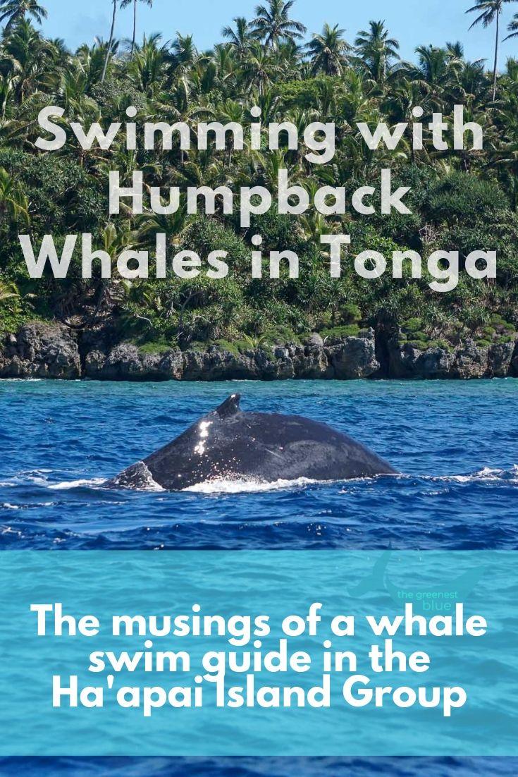 Humpback Whale Behavior in Tonga