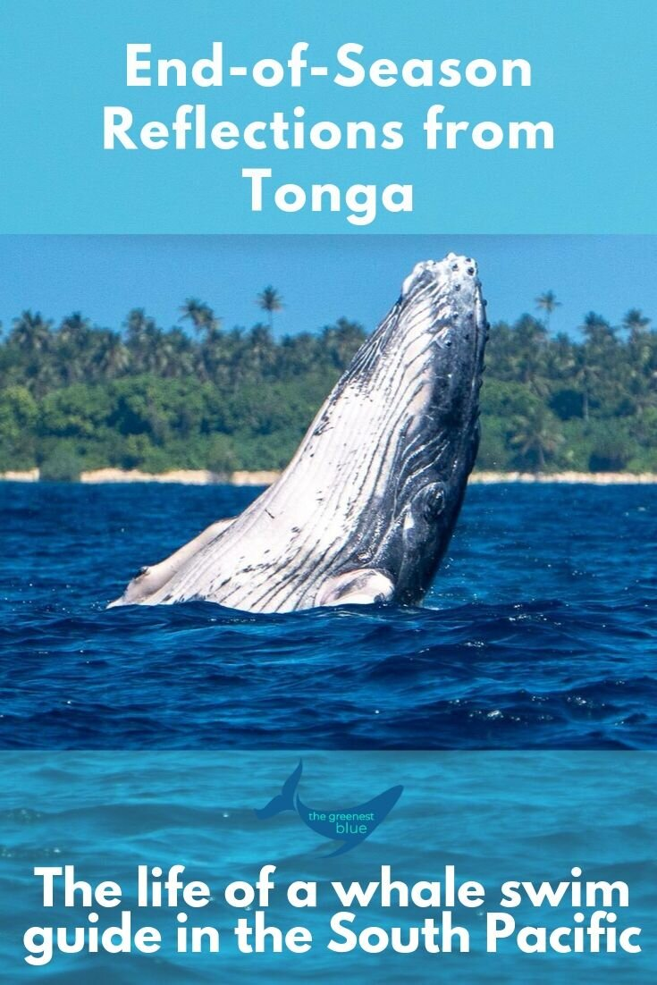 Reflections of a Whale Swim Guide in Tonga