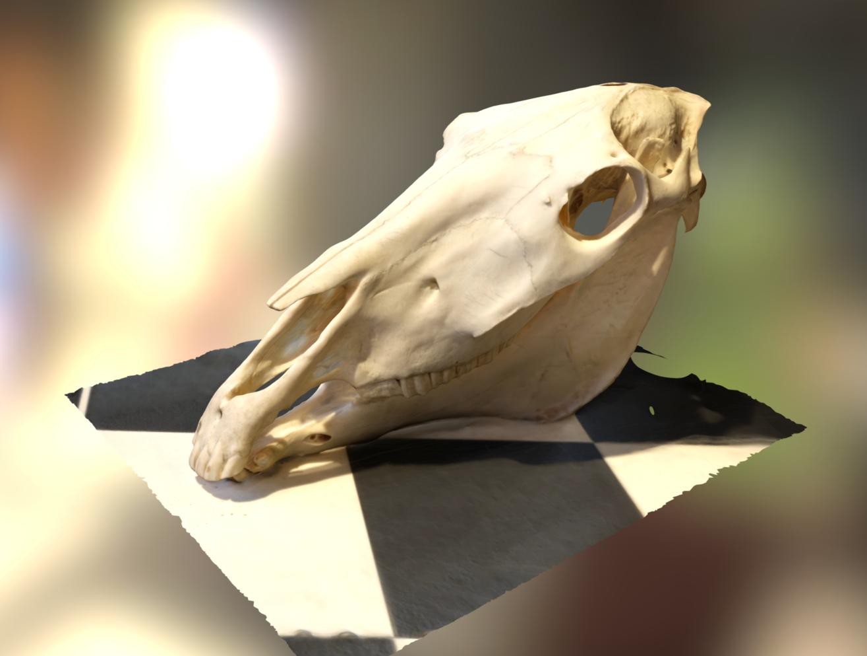 3D scan surfaces