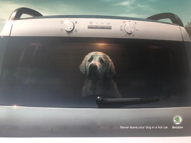 dog car oven.jpg