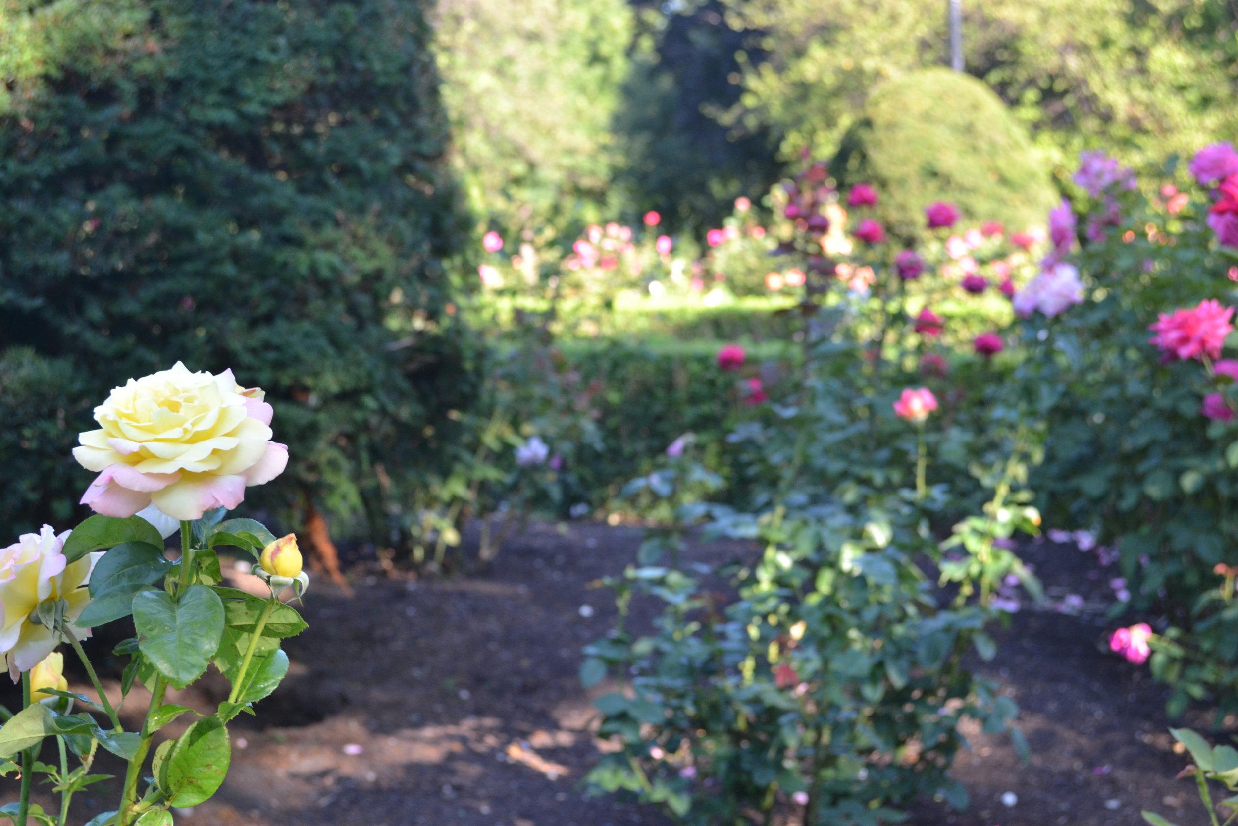 flower; bri rinehart