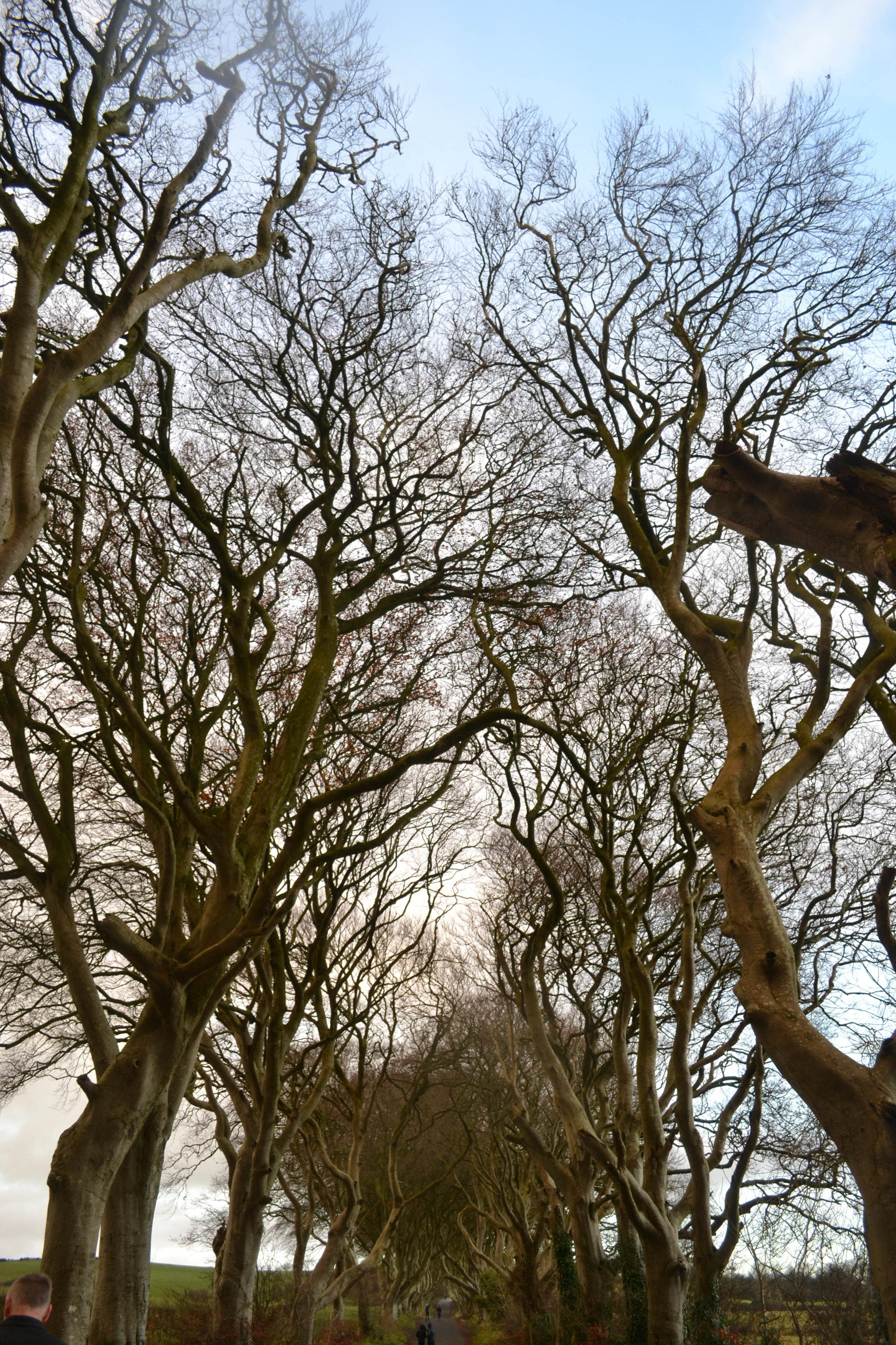 bri rinehart; the dark hedges; game of thrones; ireland