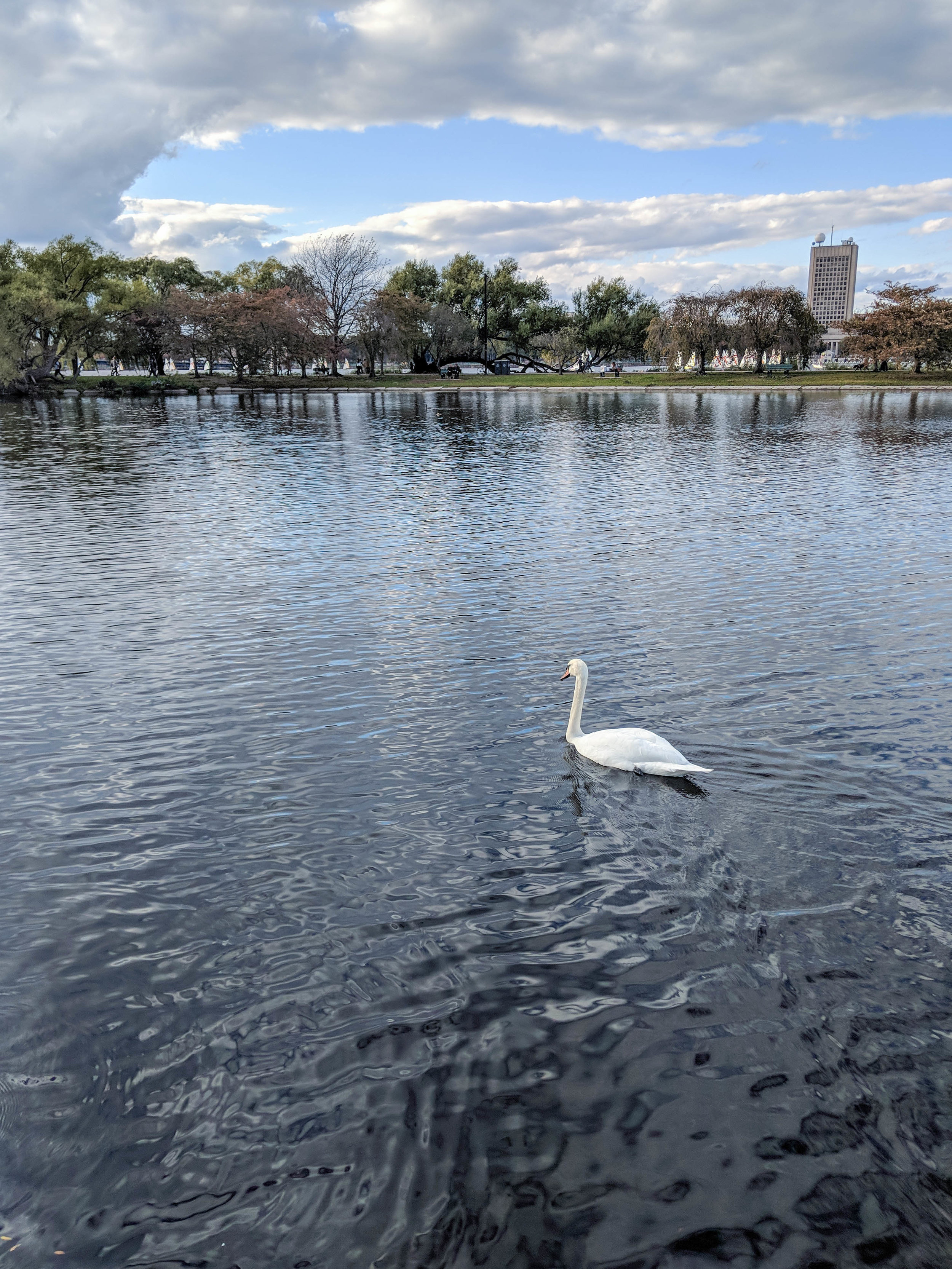 bri rinehart; swan; charles esplanade; photography