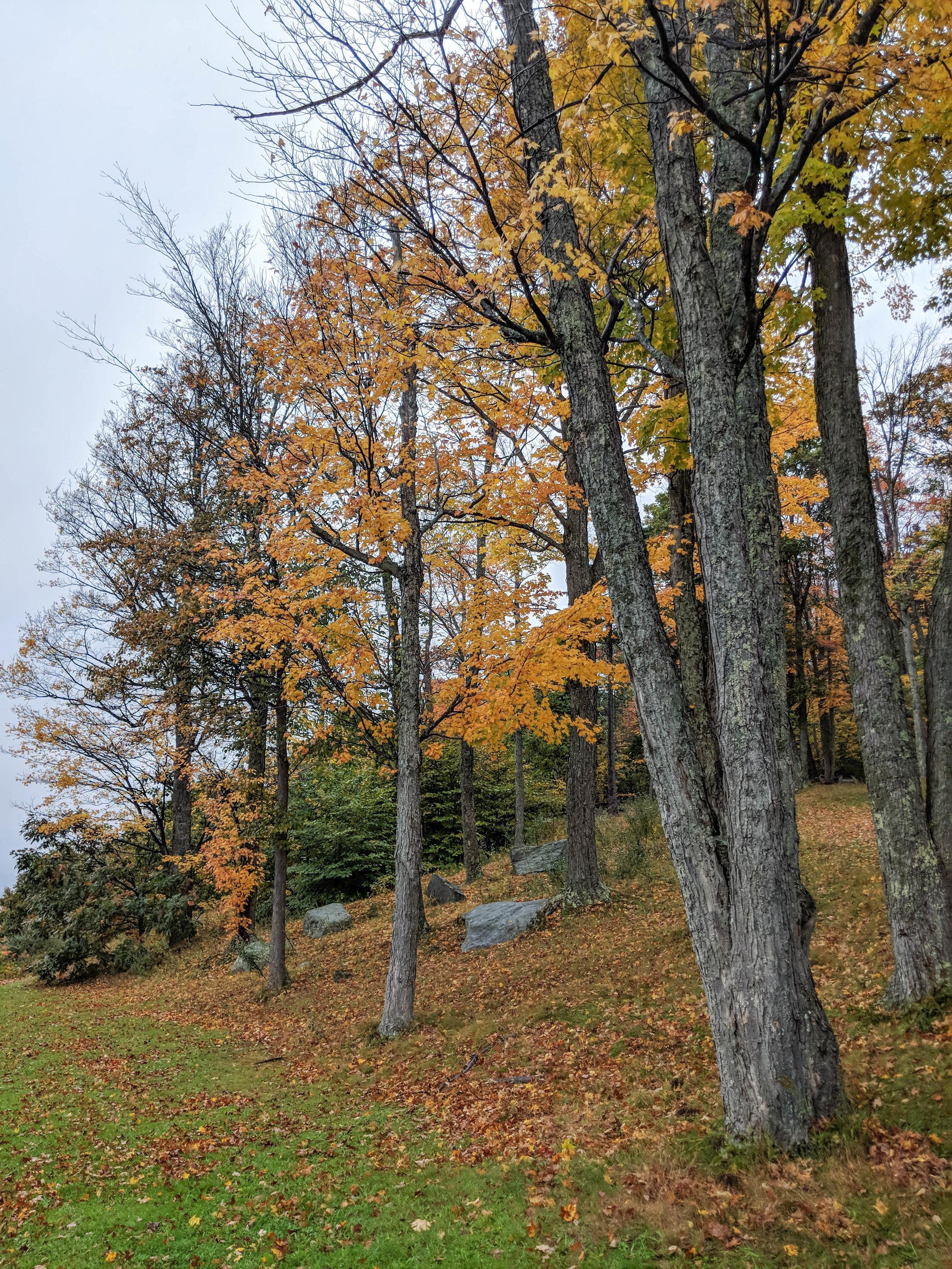 bri rinehart; photography; new hampshire; fall; trees