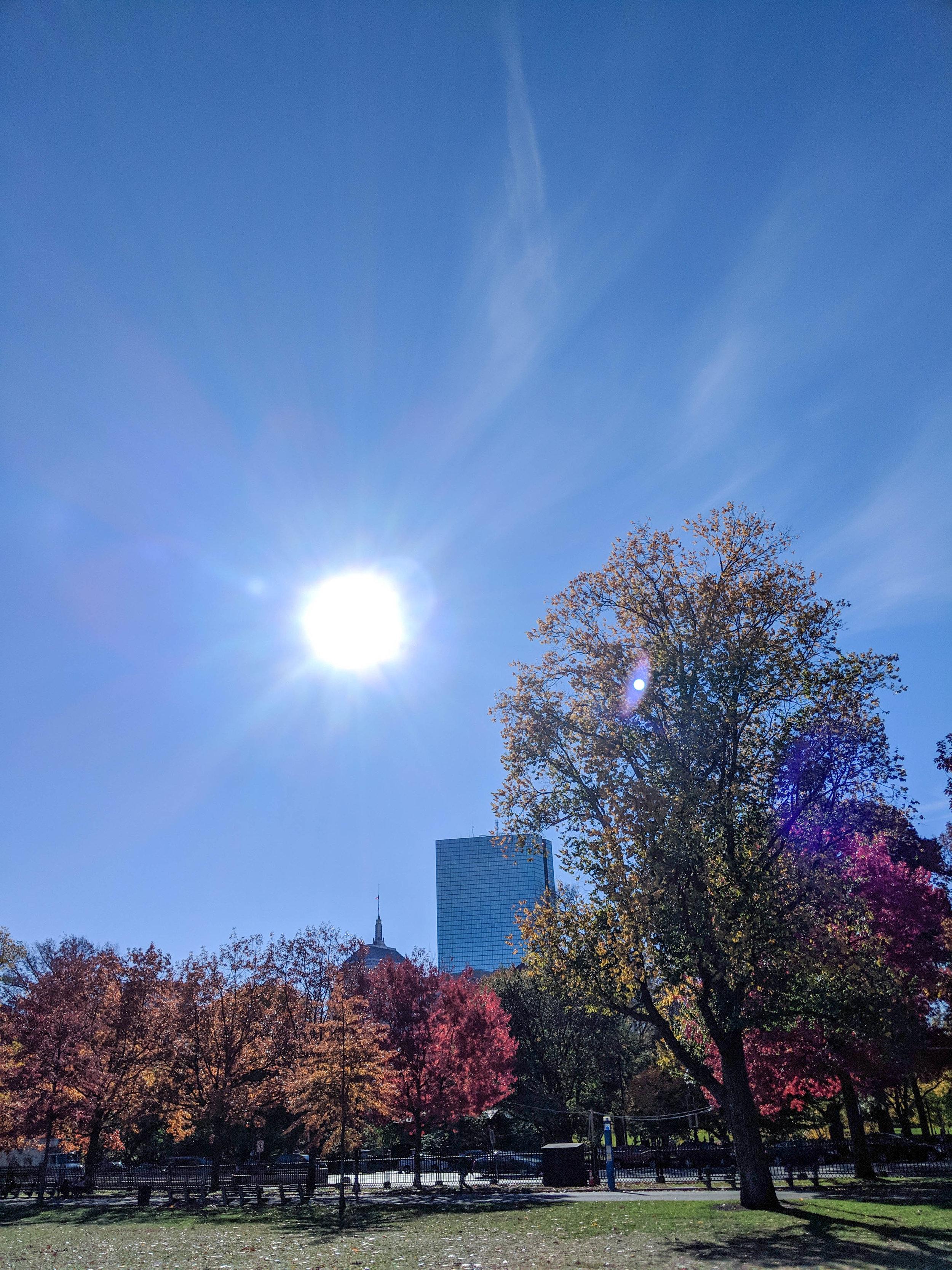 bri rinehart; photography; nature; boston; fall; boston commons