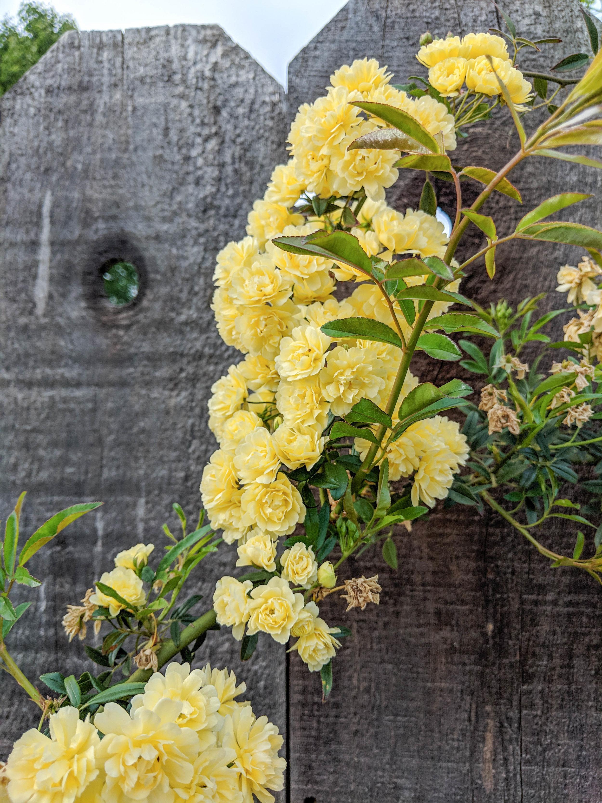 bri rinehart; photography; photography series; spring; flowers