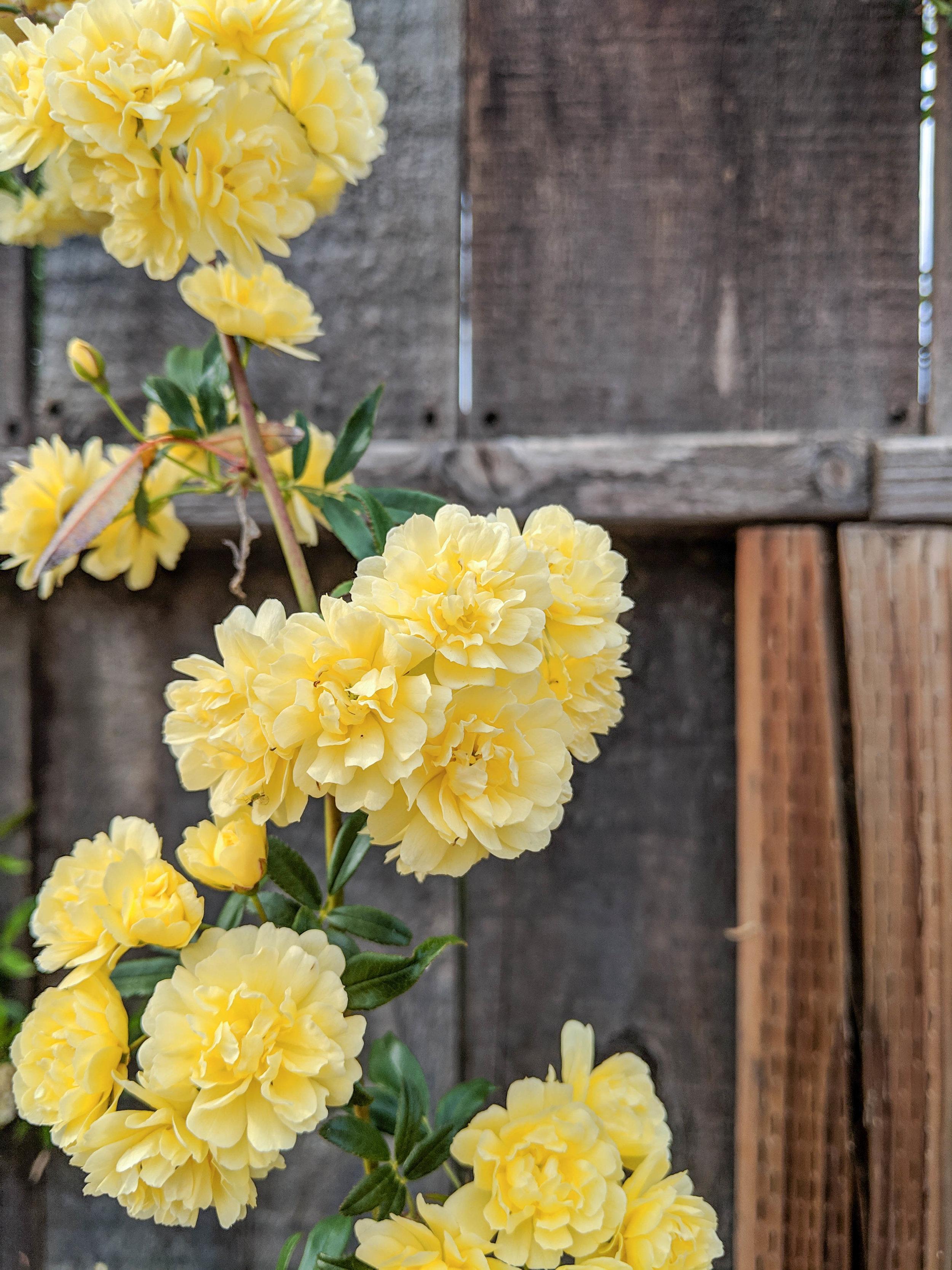 bri rinehart; photography; photography series; flowers; nature