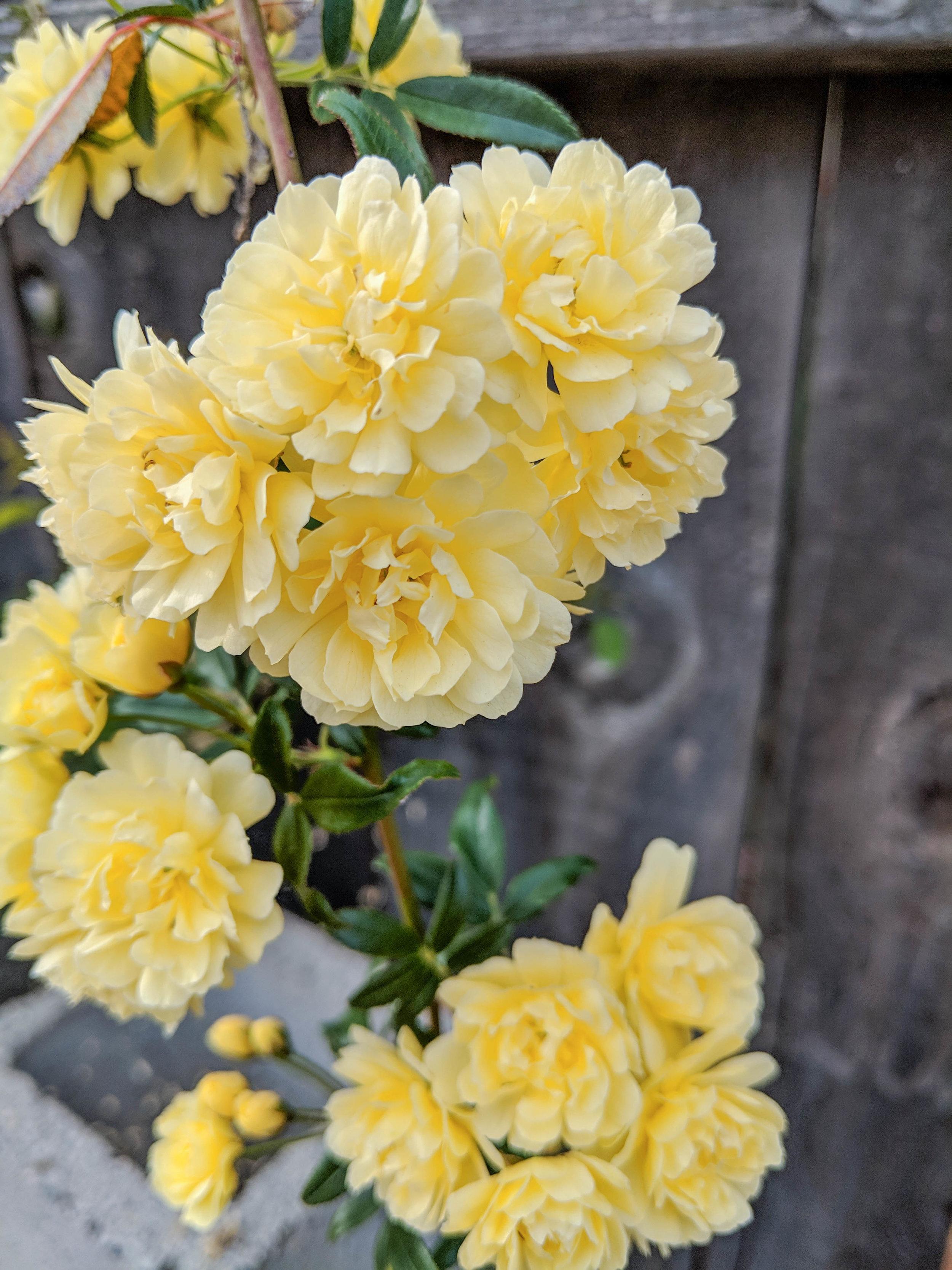 bri rinehart; photography; photography series; nature; flowers