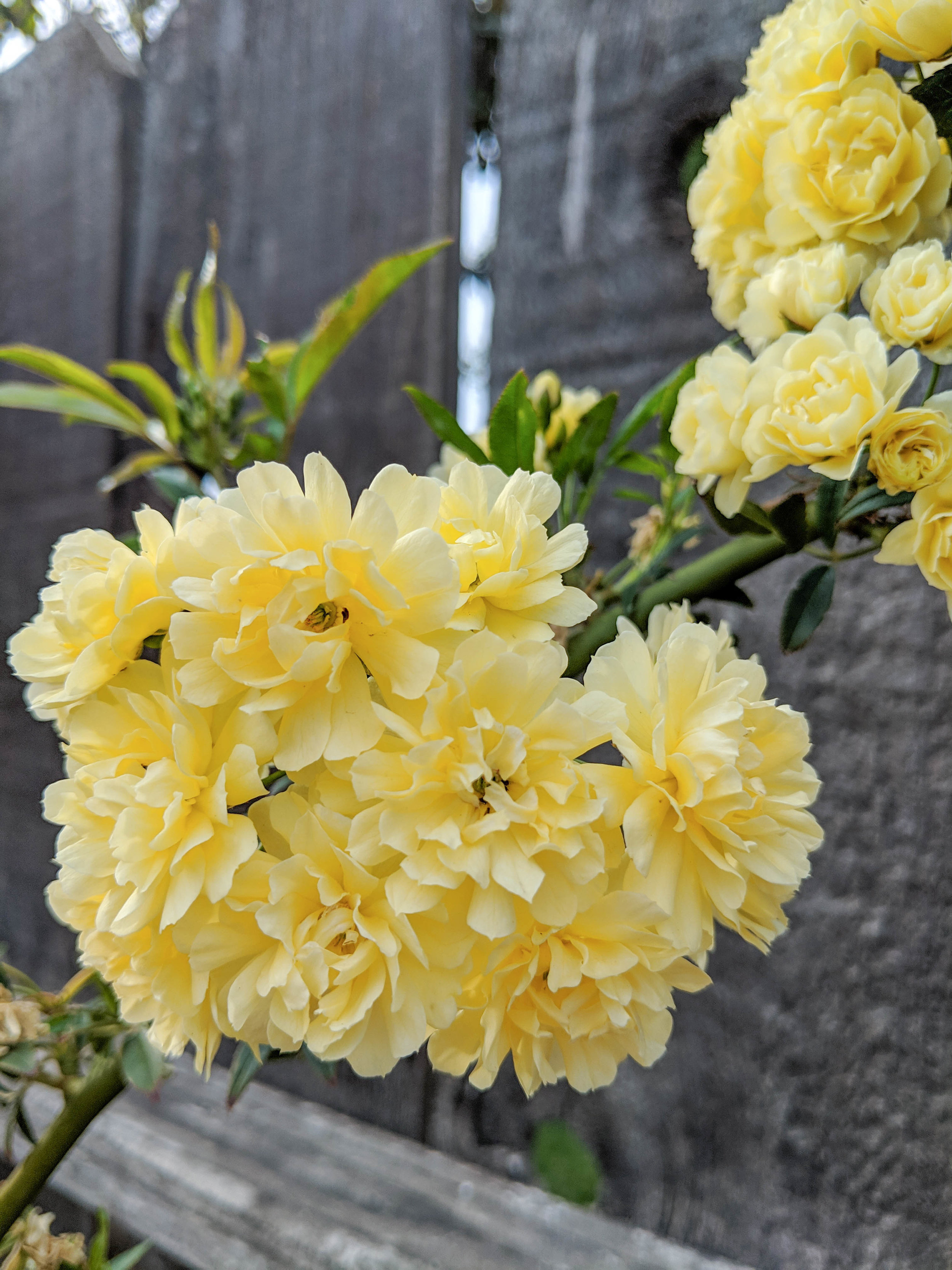 bri rinehart; photography; photography series; flowers; spring