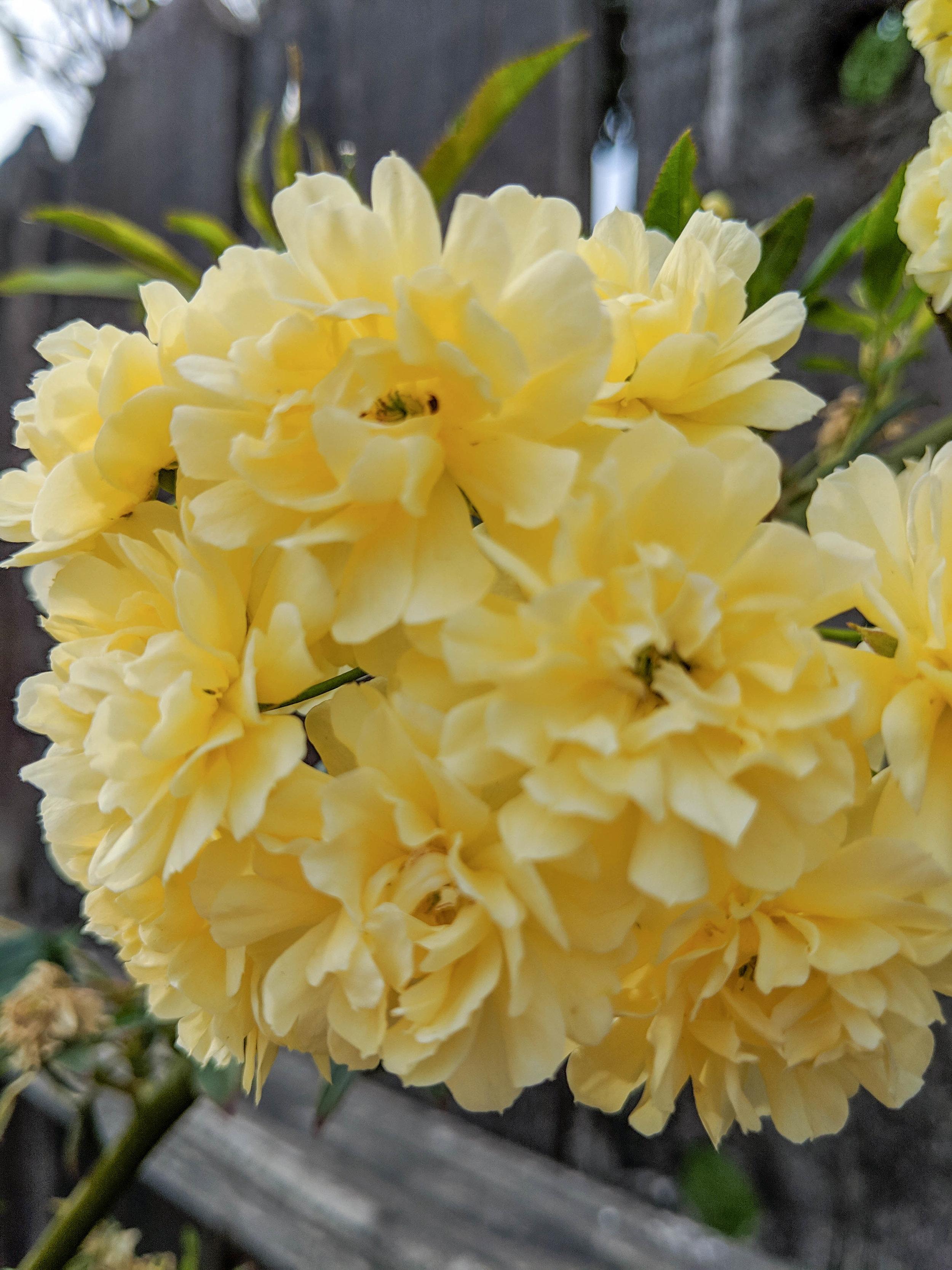 bri rinehart; photography; photography series; flowers; spring; nature