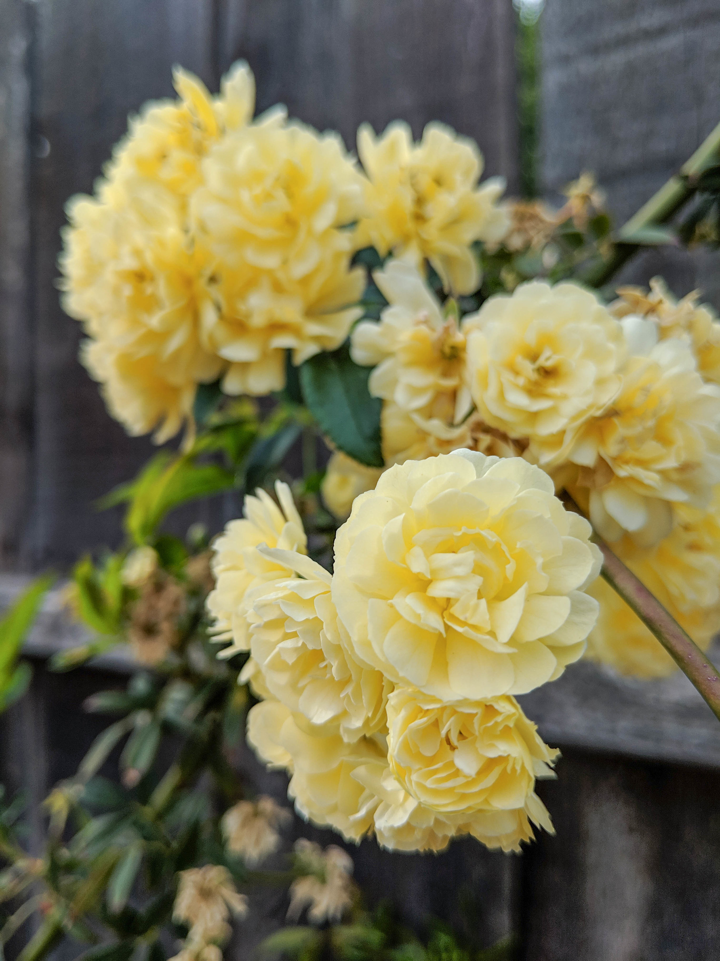 bri rinehart; photography; photography series; flowers; nature; spring