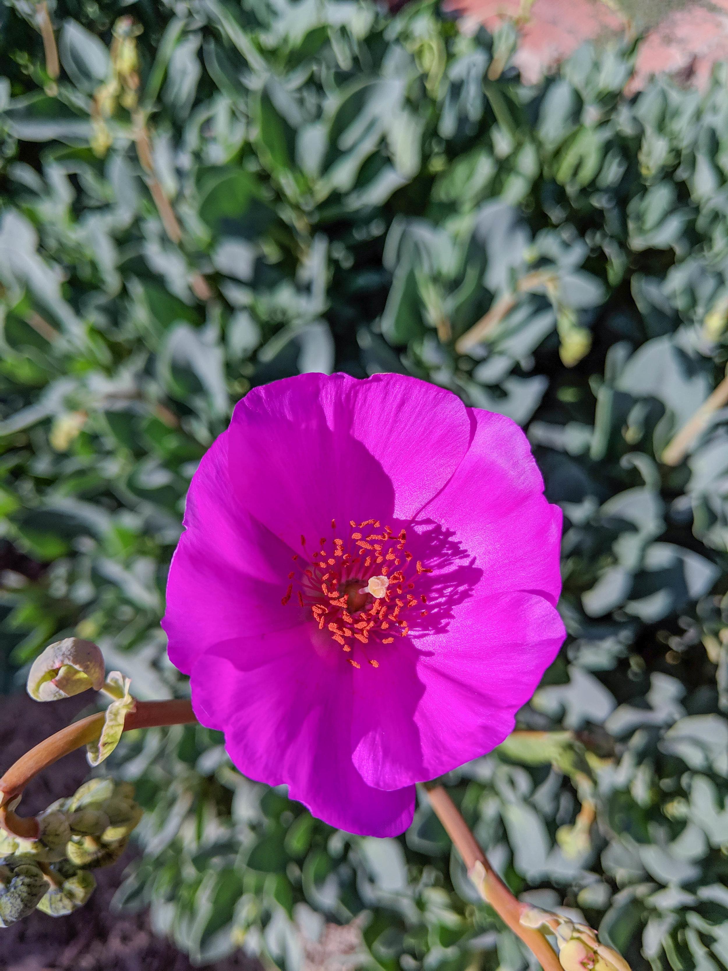 bri rinehart; photography; flower; nature