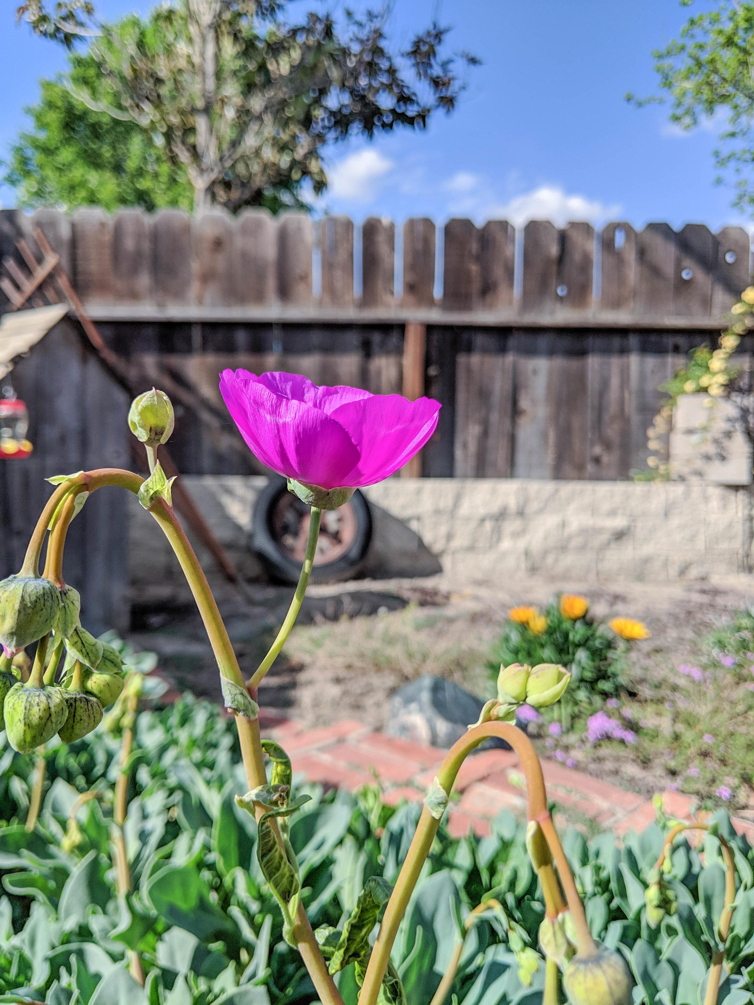 bri rinehart; photography; nature; flower