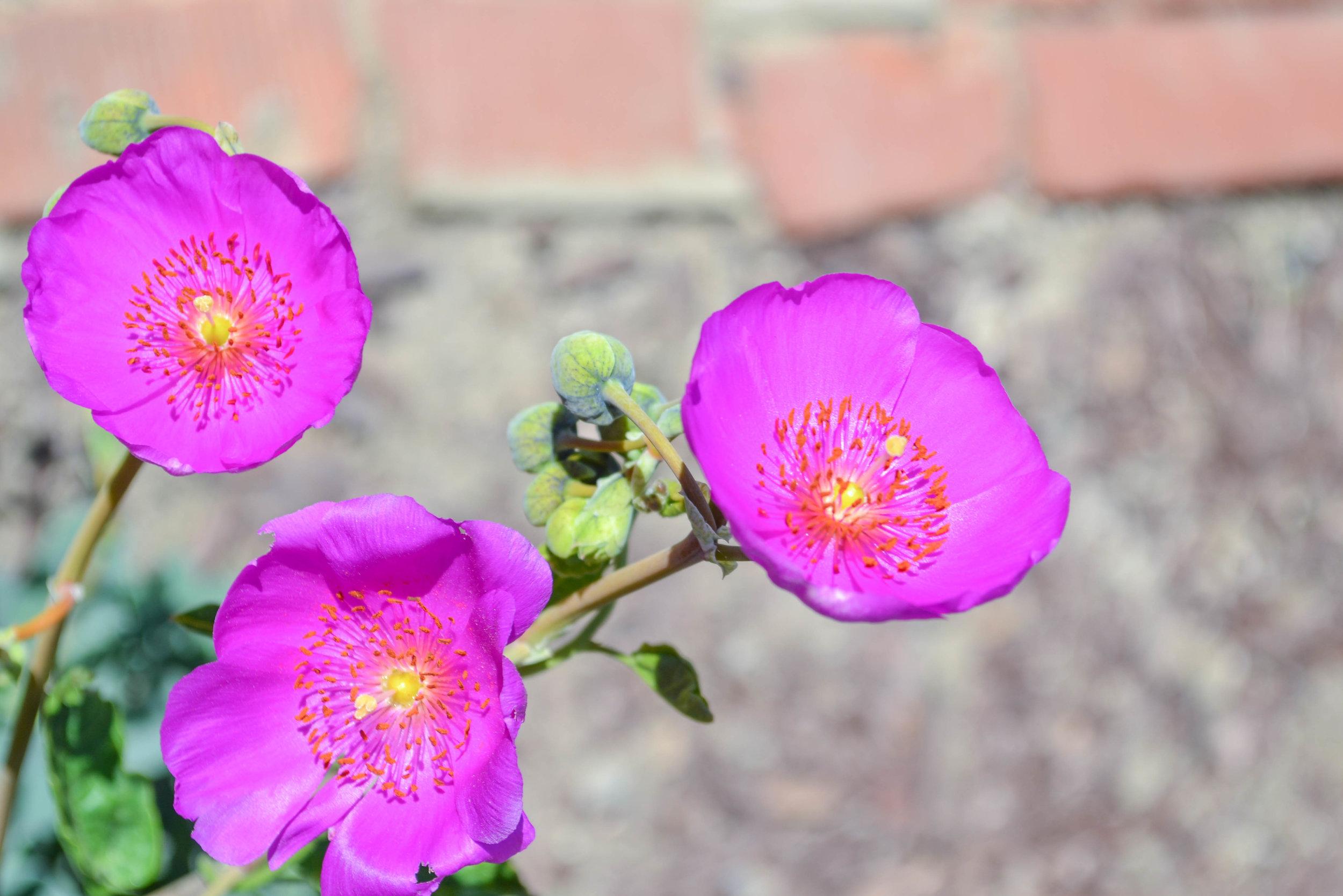 bri rinehart; nature; photographer; flower