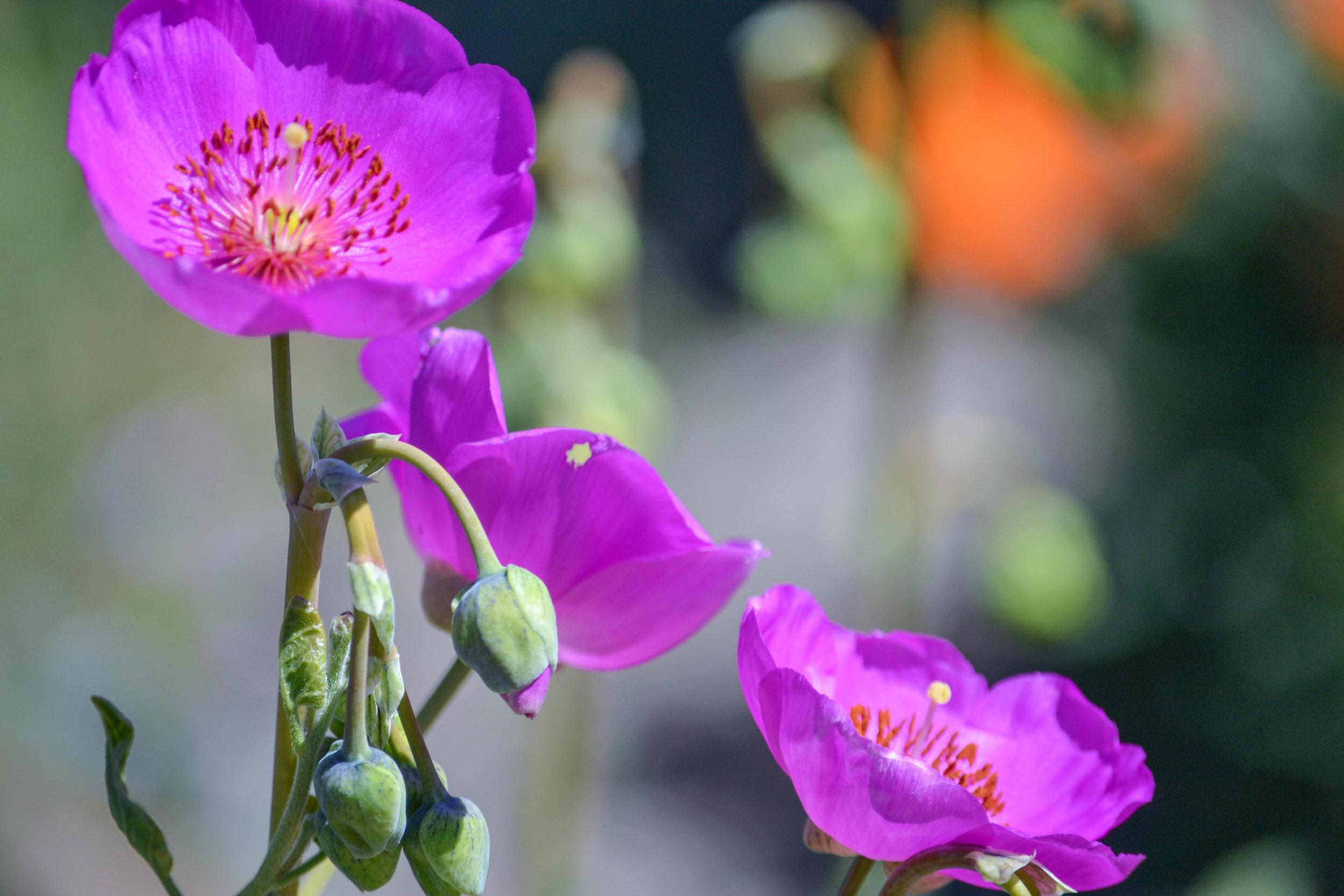 bri rinehart; nature; flower; photography