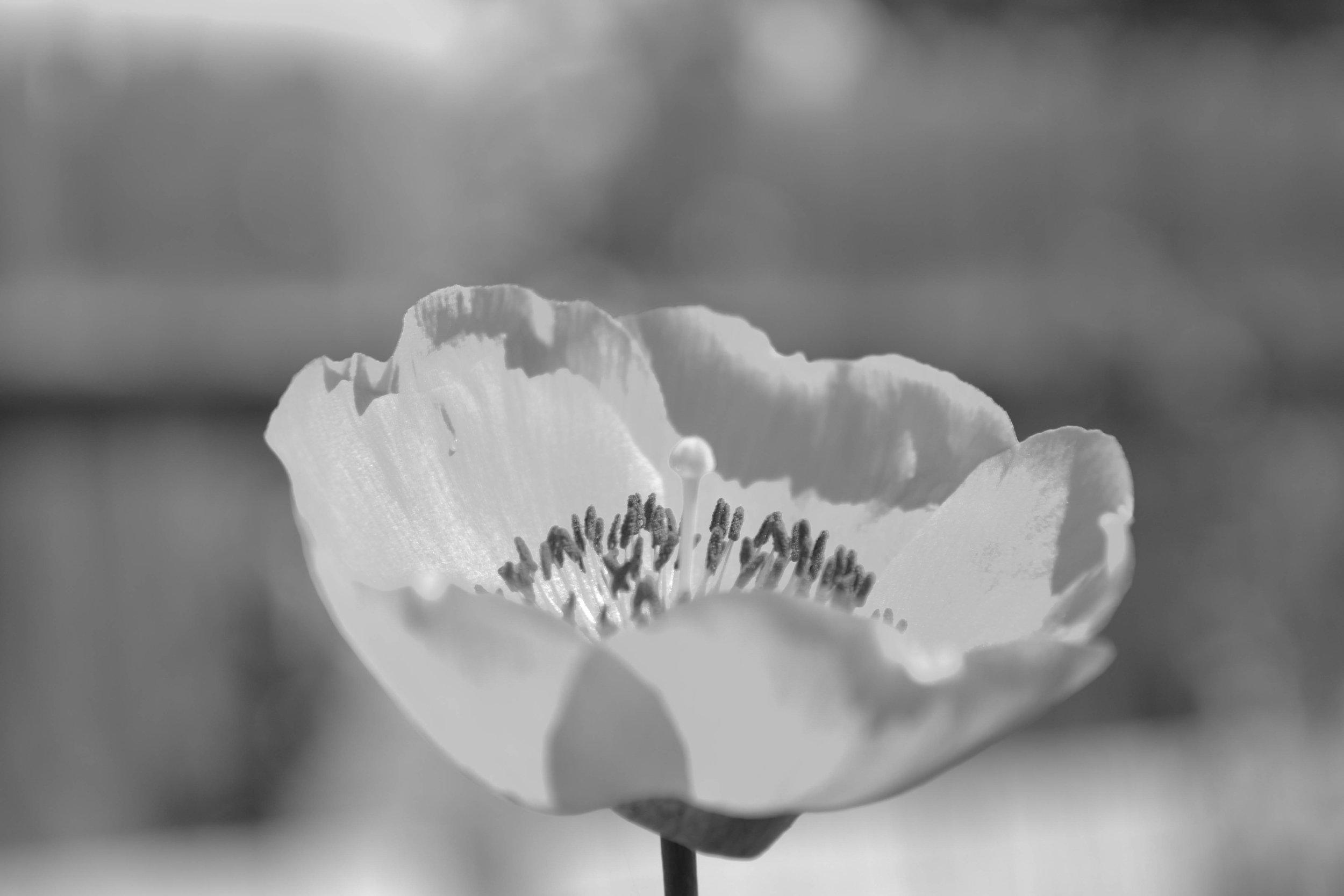 bri rinehart; nature; photography; flower