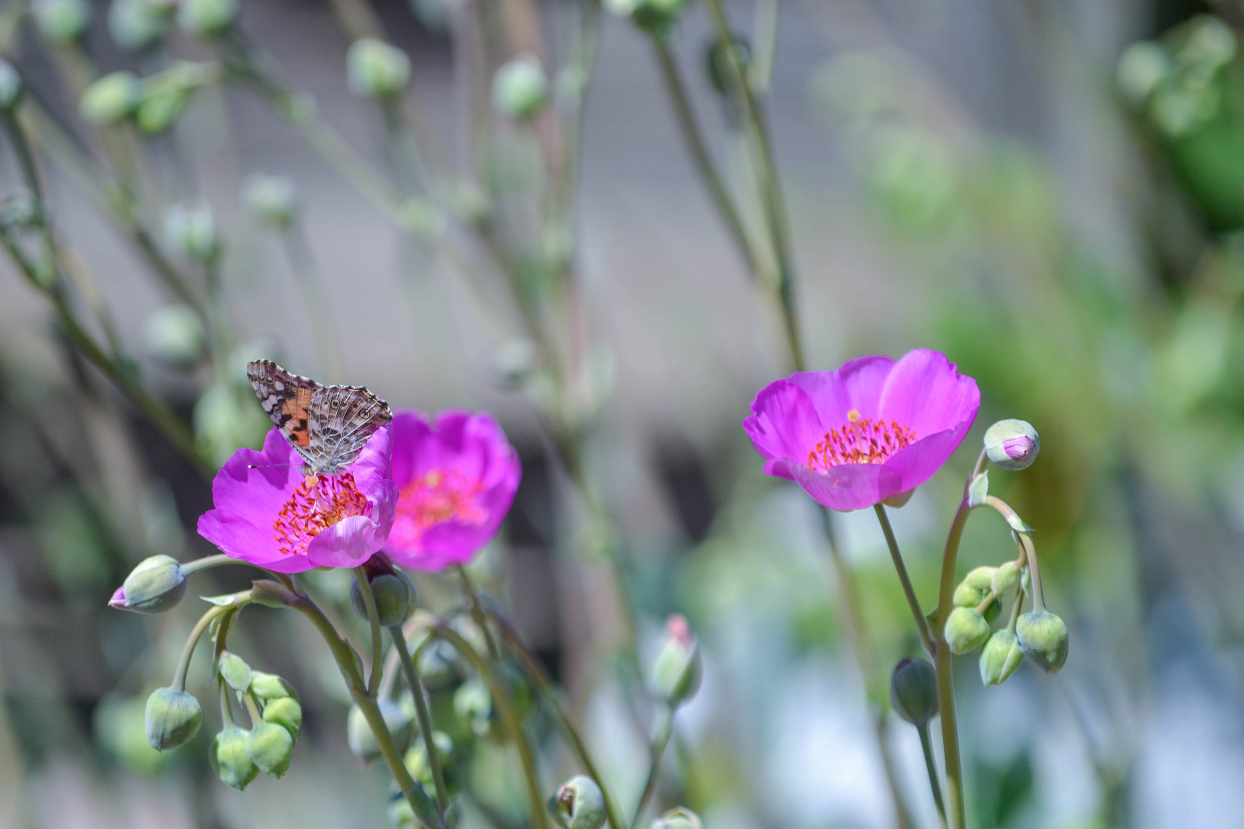 bri rinehart; photography; butterfly; california; nature