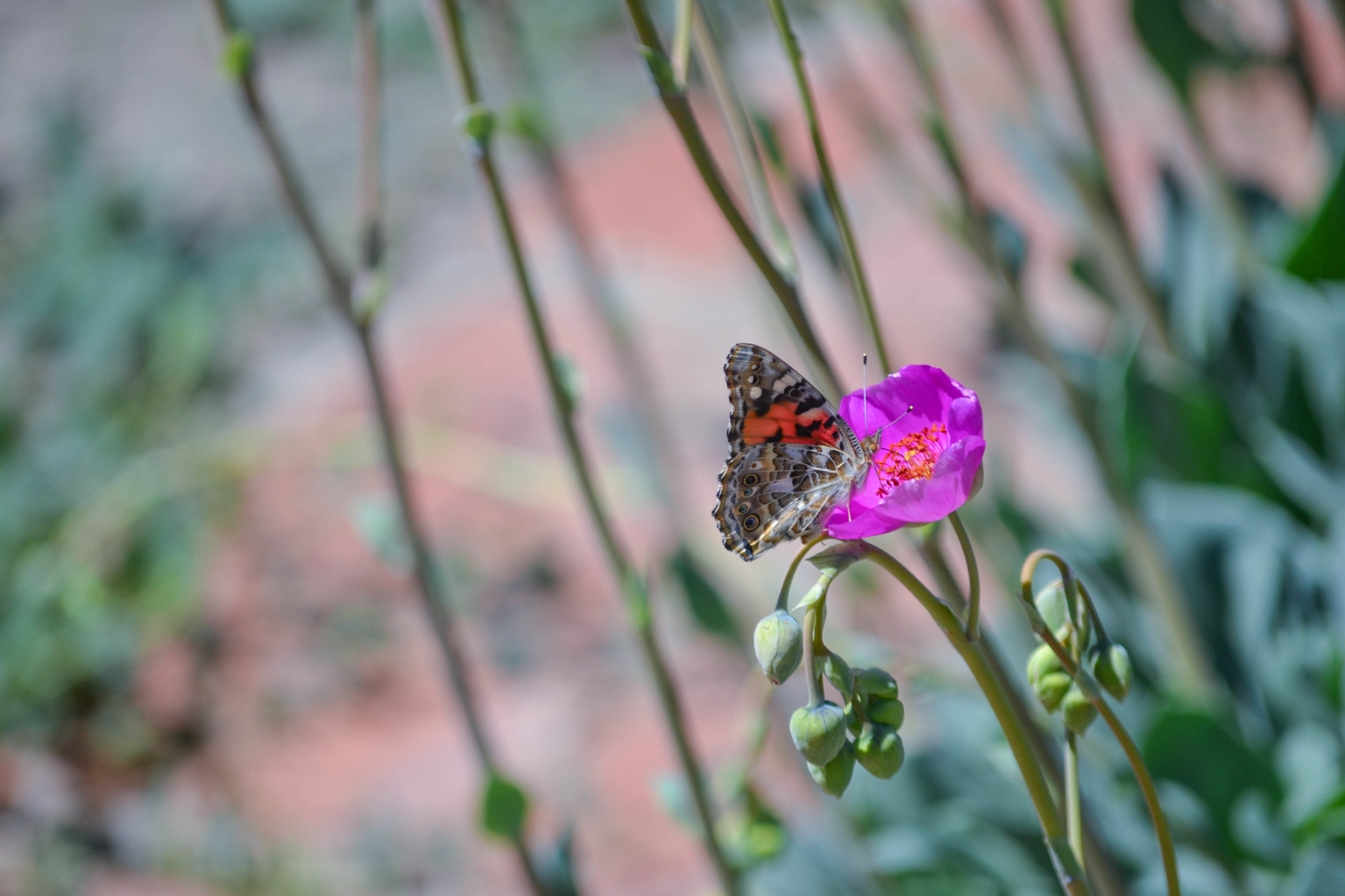 bri rinehart; photography; butterfly; nature