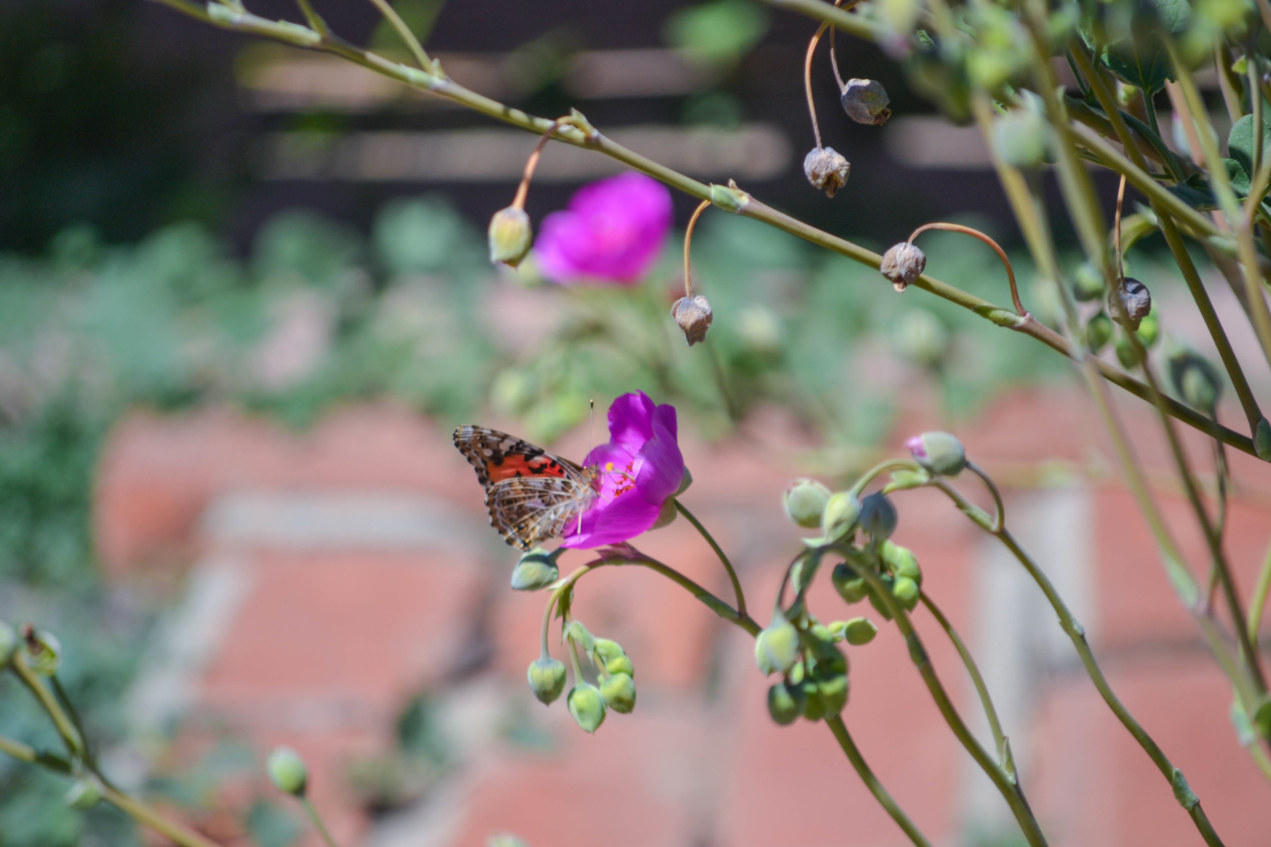 bri rinehart; photography; california; butterfly; nature