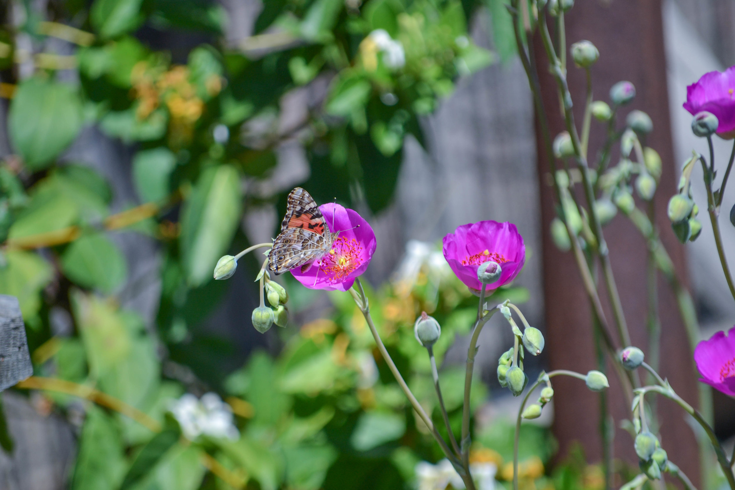 bri rinehart; photography; butterfly; nature; california