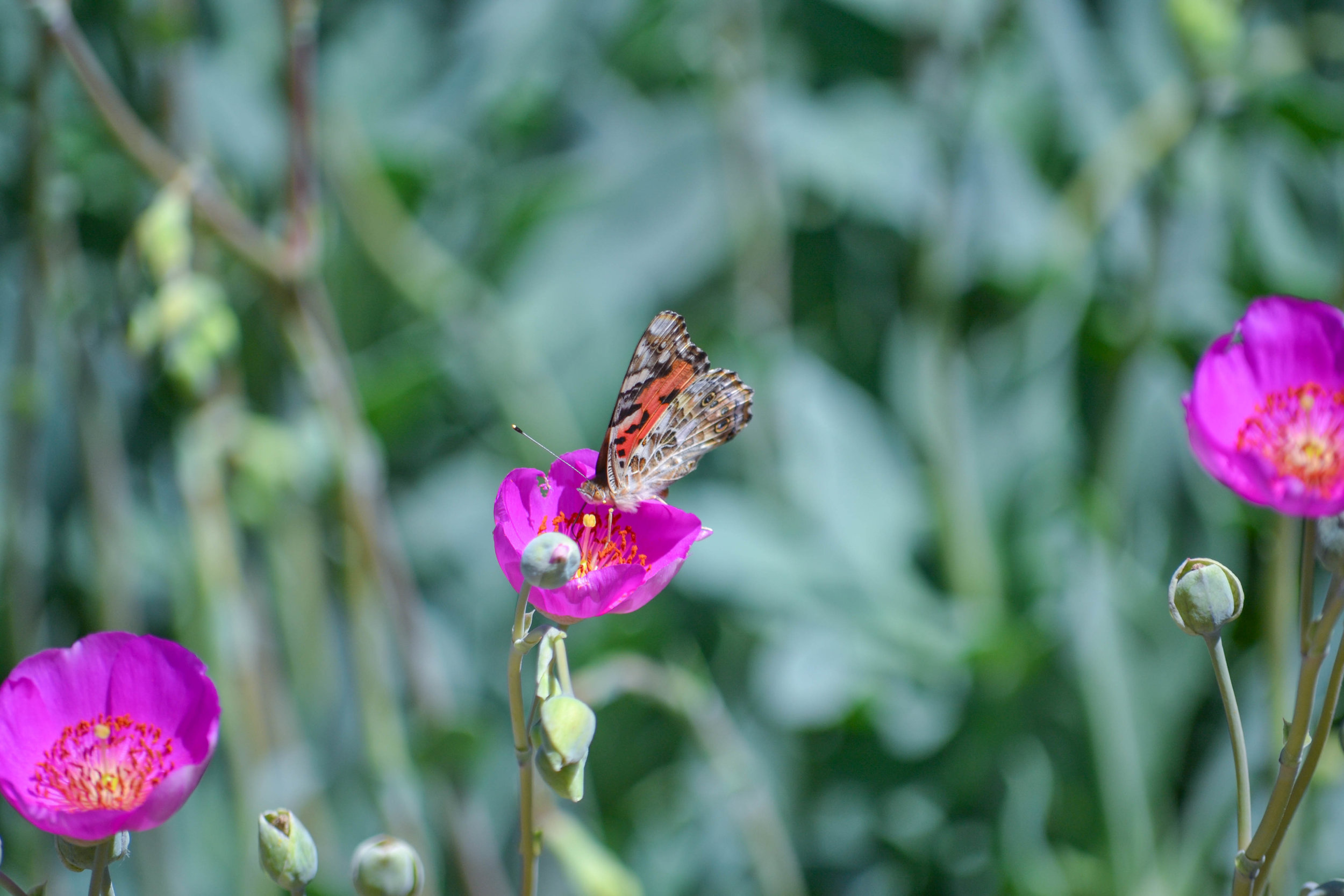 bri rinehart; photography; nature; butterfly; california