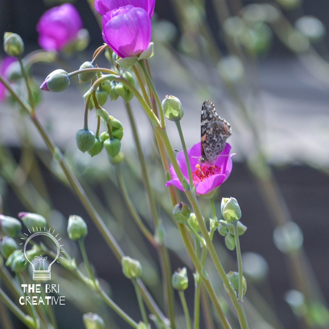 bri rinehart; photography; butterfly; the bri creative; animal; insect