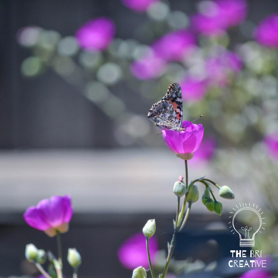 bri rinehart; photography; the bri creative; flowers; nature; california