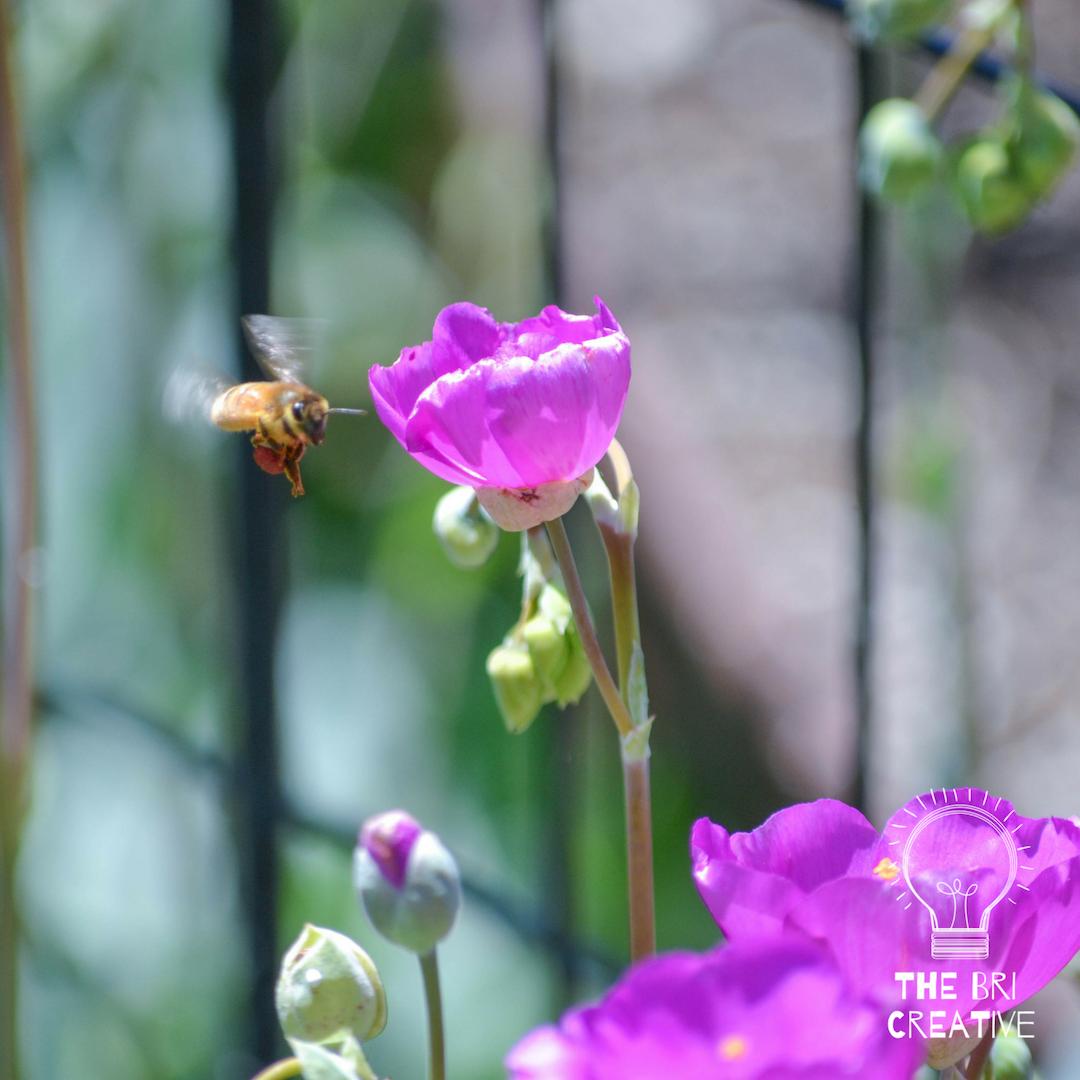 bri rinehart; photography; california; nature; flowers; the bri creative