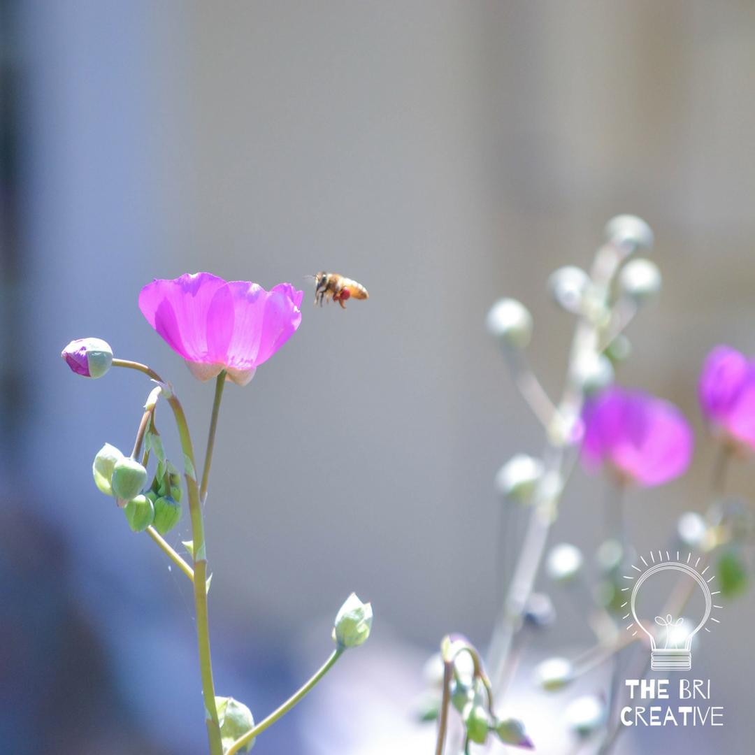bri rinehart; california; photography; the bri creative; nature; flower; bee