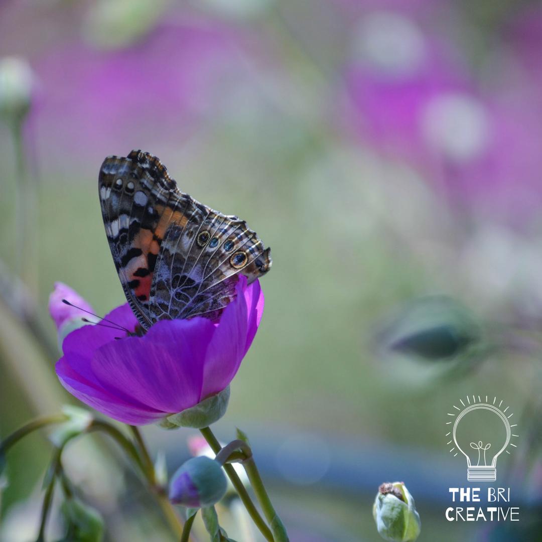 bri rinehart; photography; california; the bri creative; flower; nature