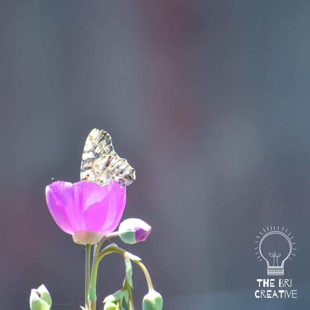 bri rinehart; photography; nature; flower; california; the bri creative