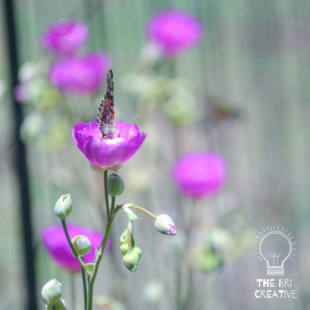 bri rinehart; the bri creative; photography; flowers; butterfly; nature