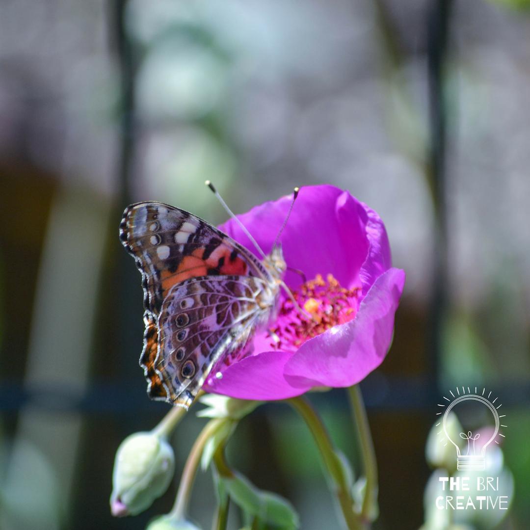 bri rinehart; photography; the bri creative; california; flowers; nature