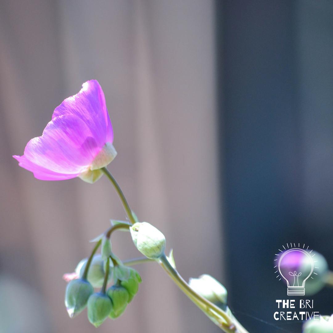 bri rinehart; california; photography; the bri creative; nature; flower