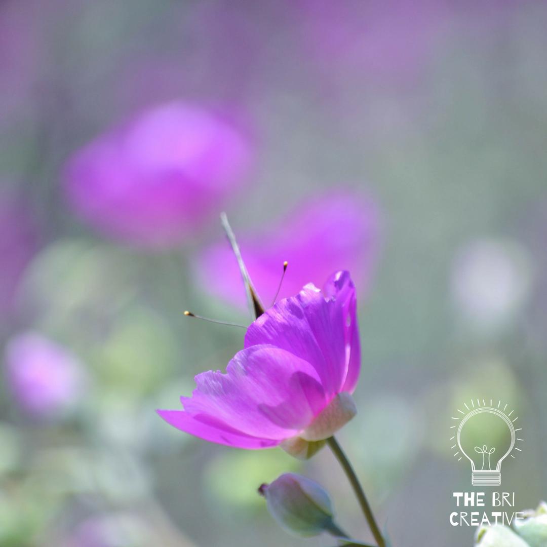 bri rinehart; the bri creative; photography; flower; california; nature