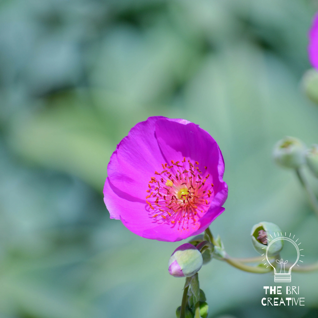 bri rinehart; photography; california; nature; flower; the bri creative