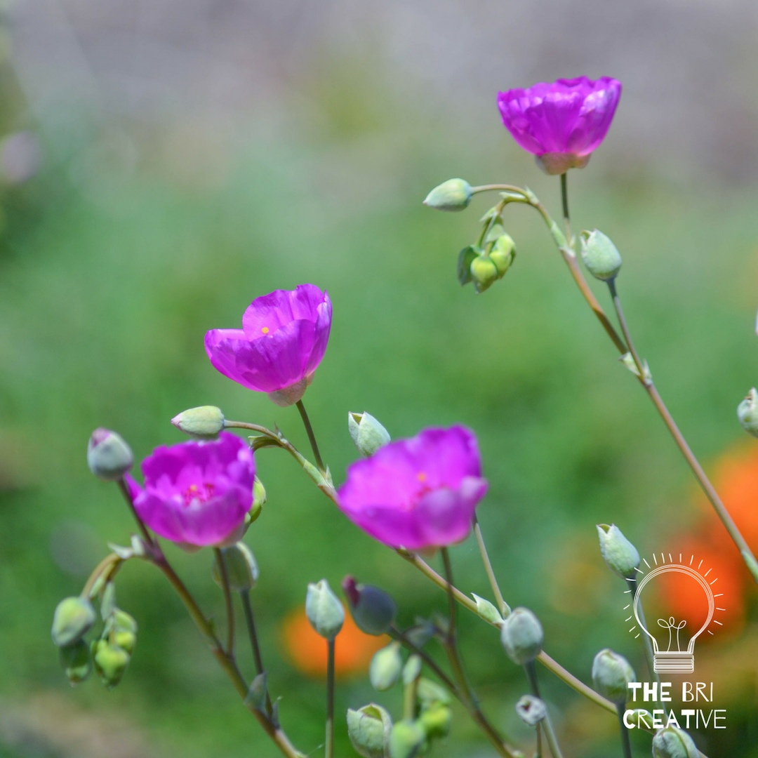 bri rinehart; photography; nature; the bri creative; flower